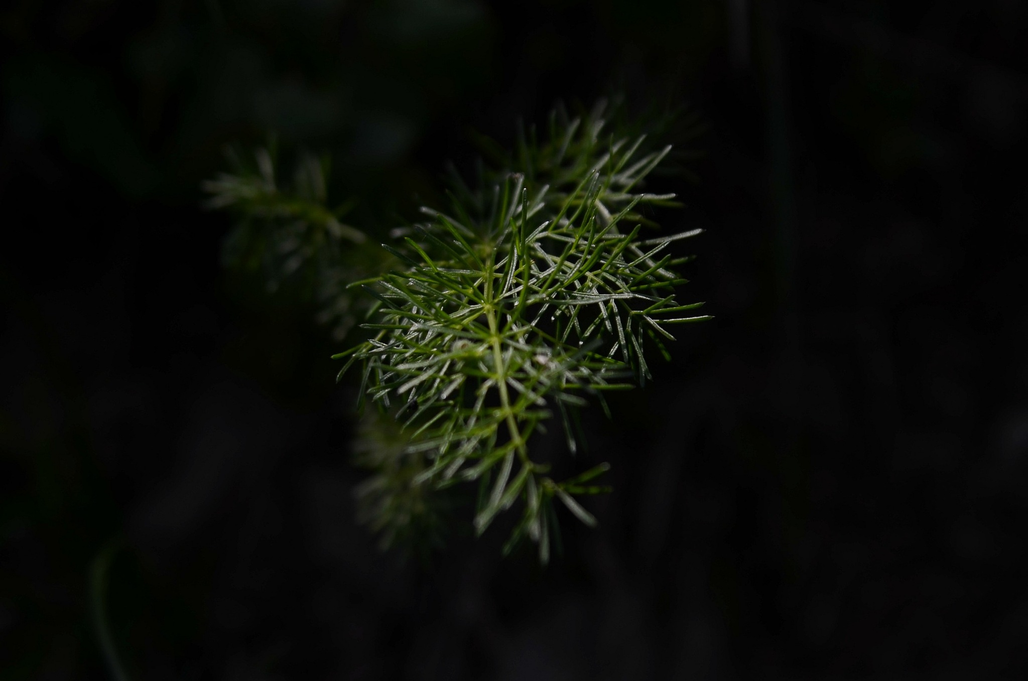 green in the shadow by marina.barbagelata