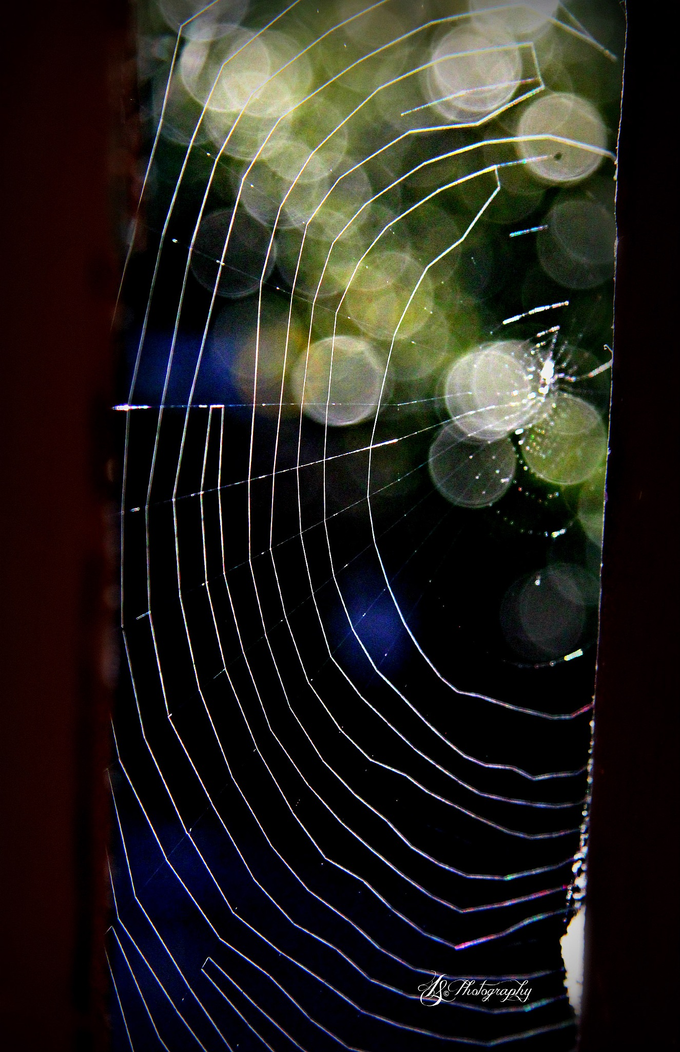 What Tiny Web's They Weave  by LauraSalomon