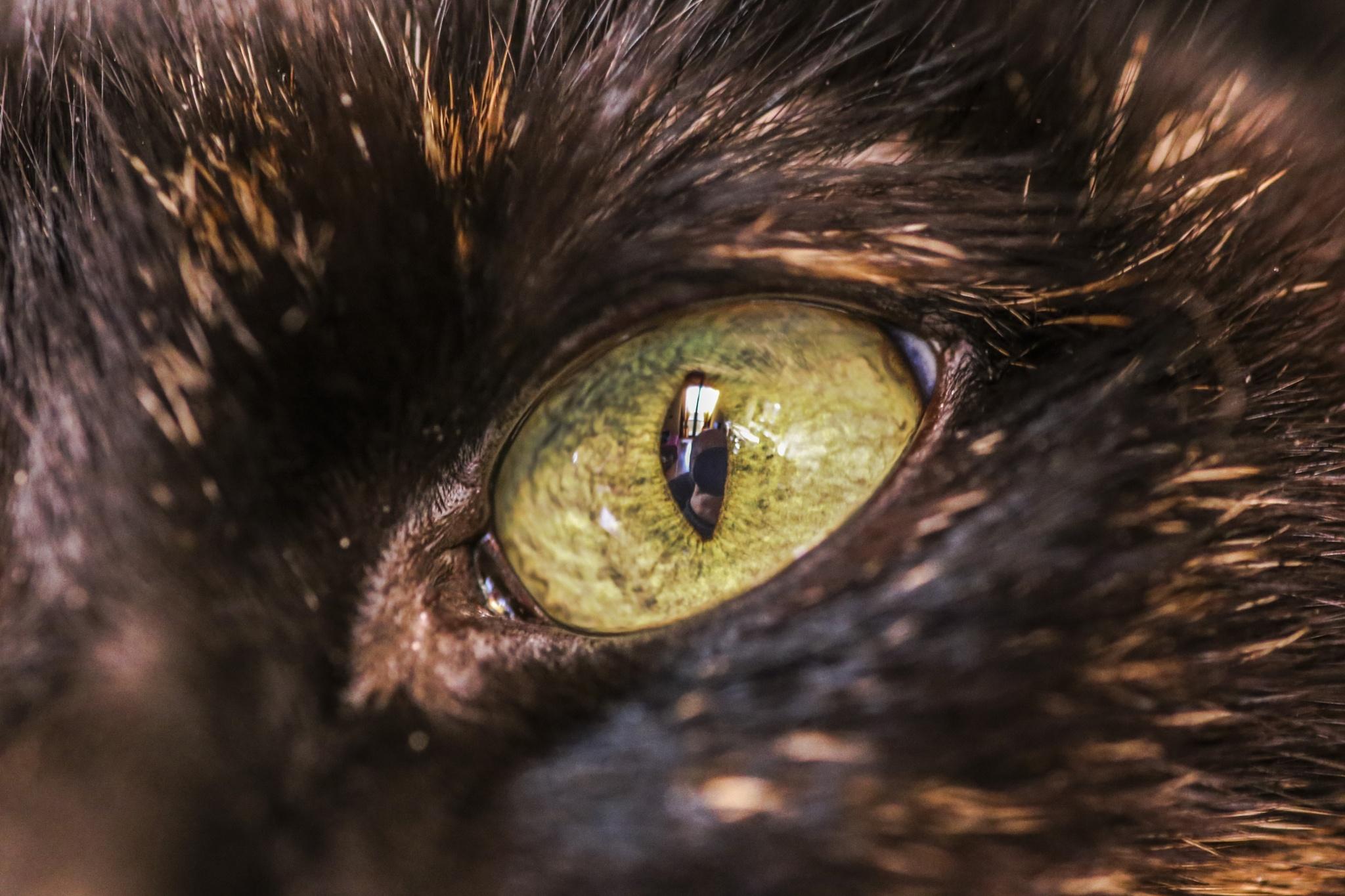 Cat's eye by Davide 'Dado Dalle Ave