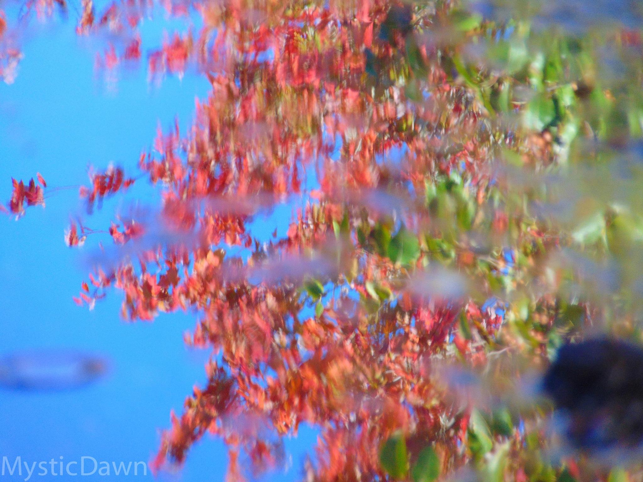 Reflection 1  by dawnjacksondavenport