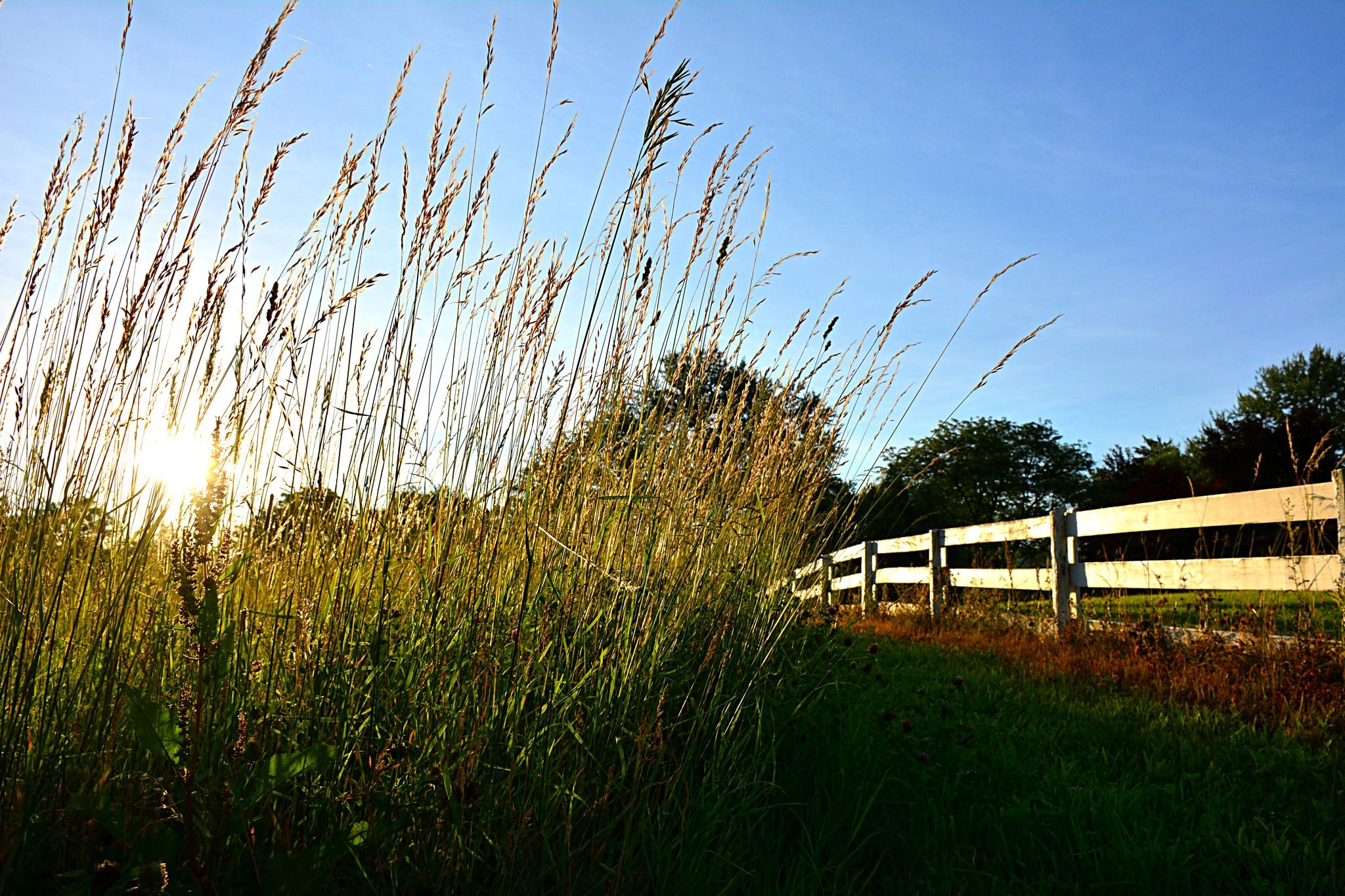 Grassy by yepimabeliever