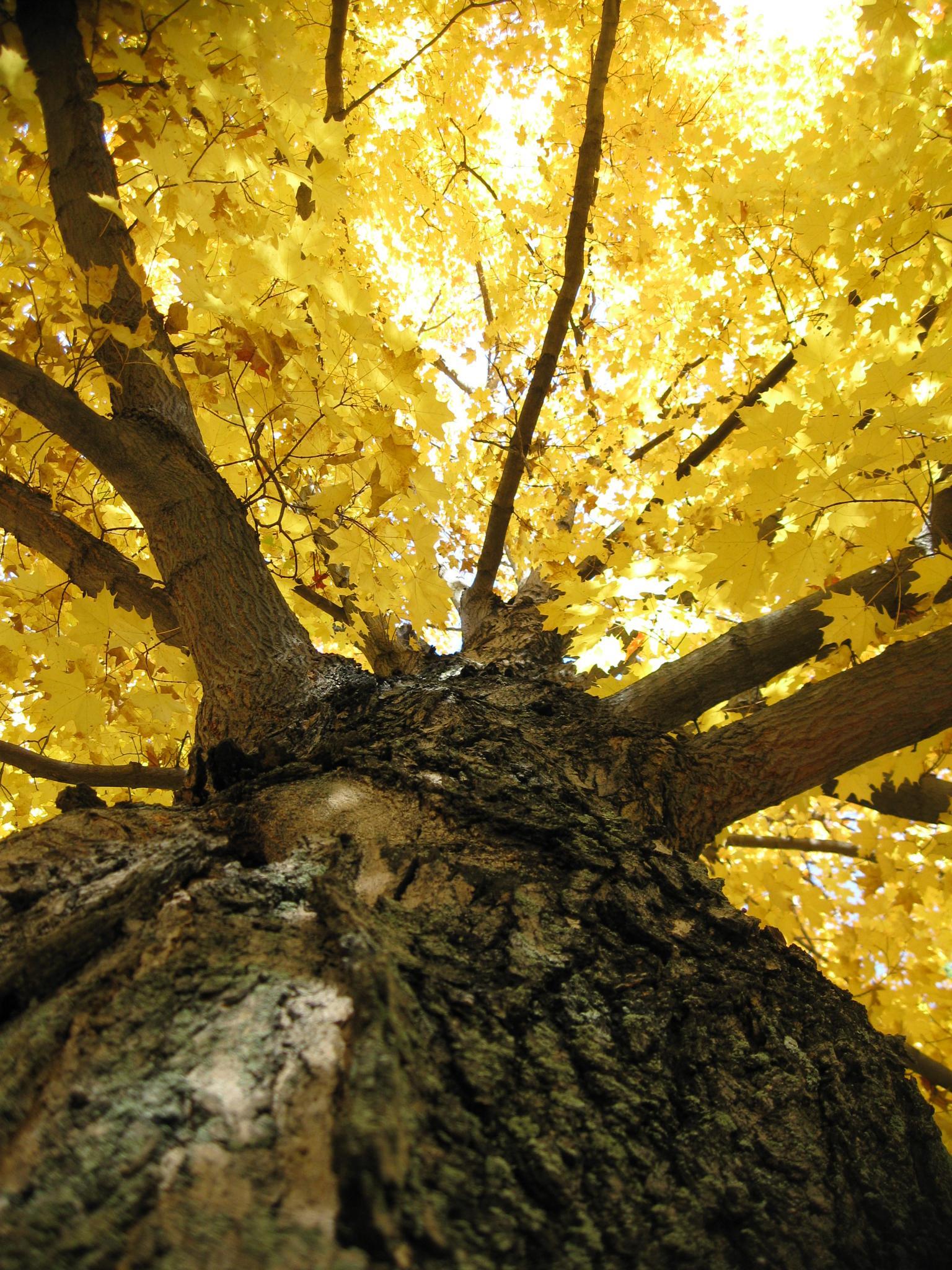 Fall Yellow by jo.mcgraw.737