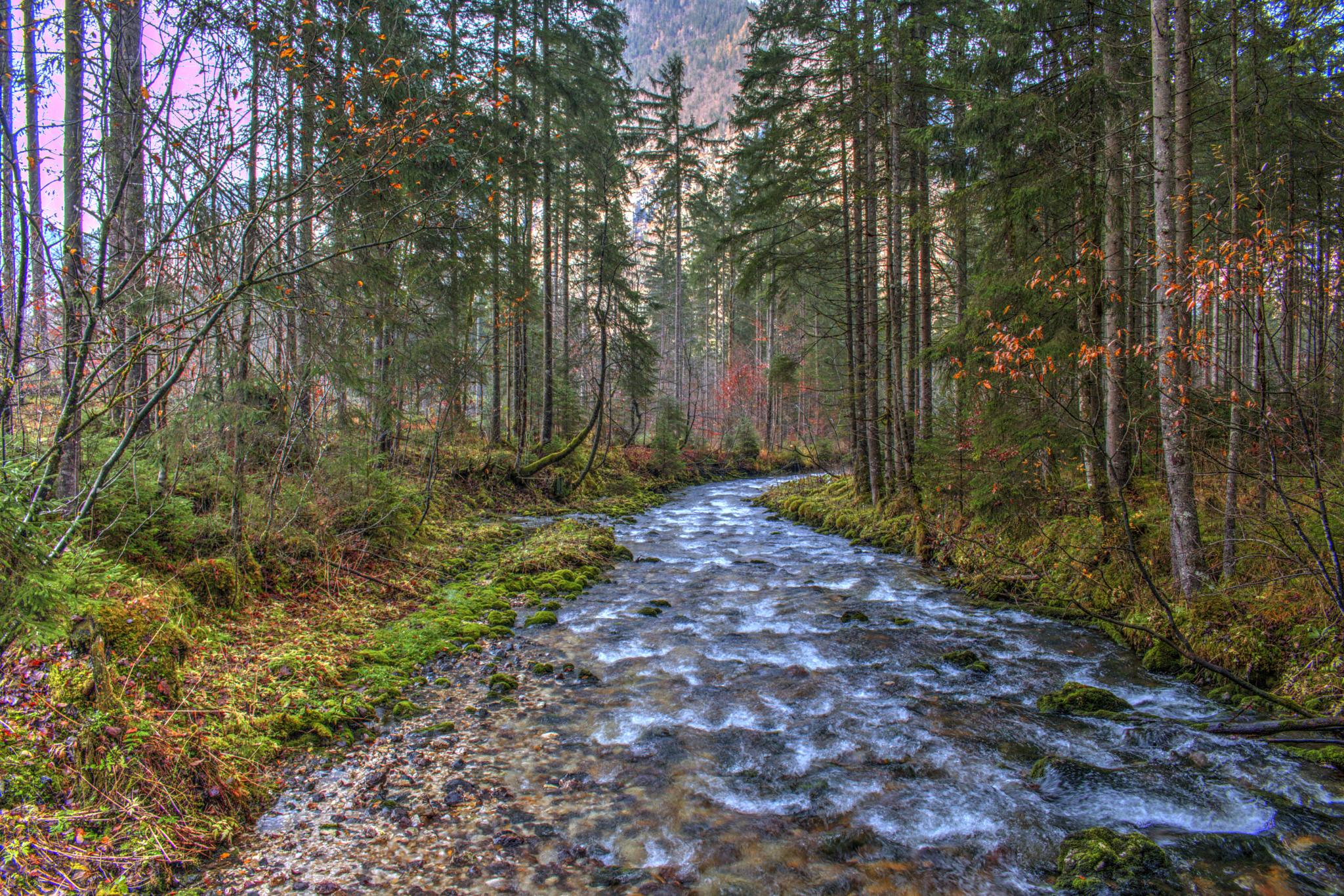 Through the forest by peter.cseke