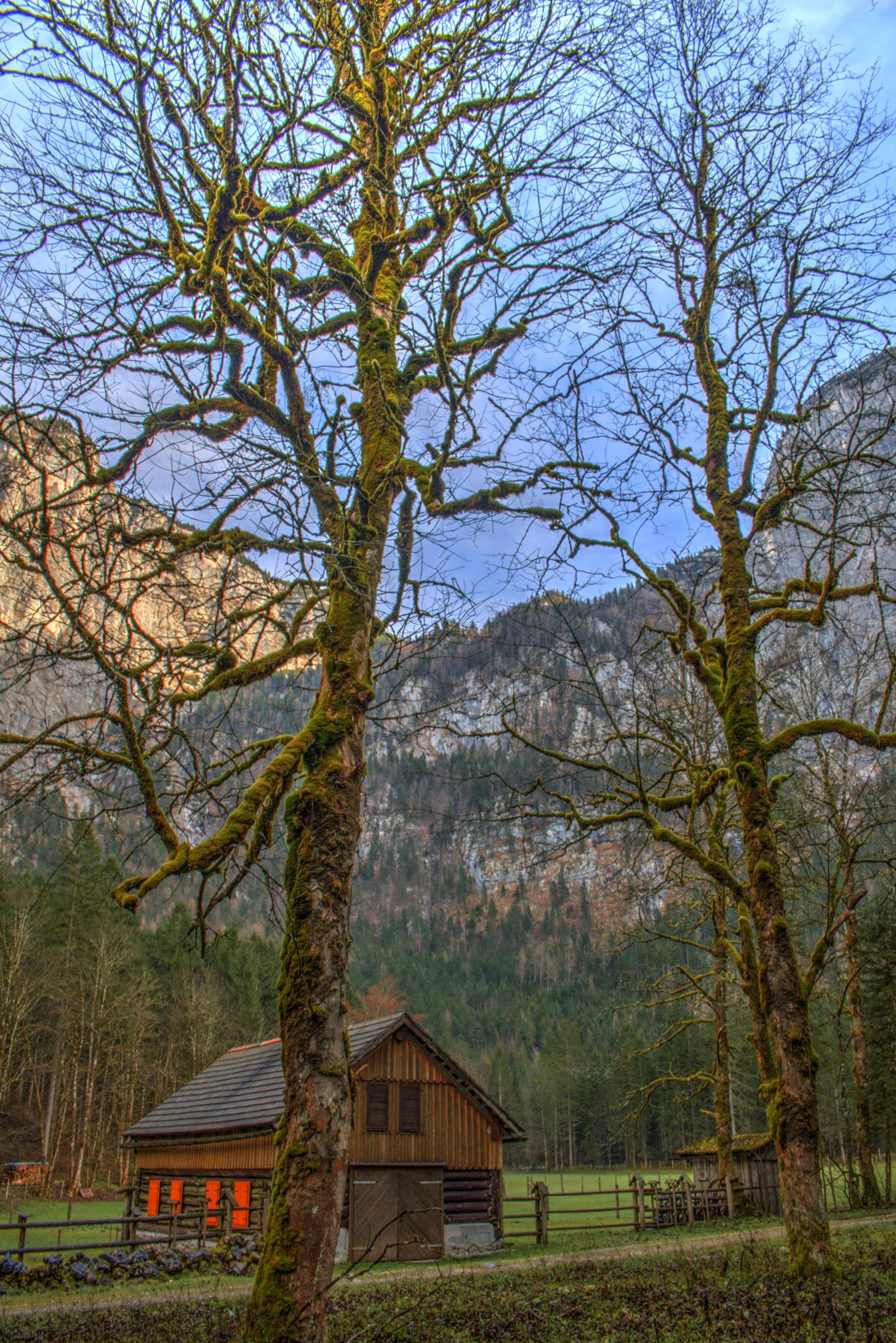 Forest farm by peter.cseke