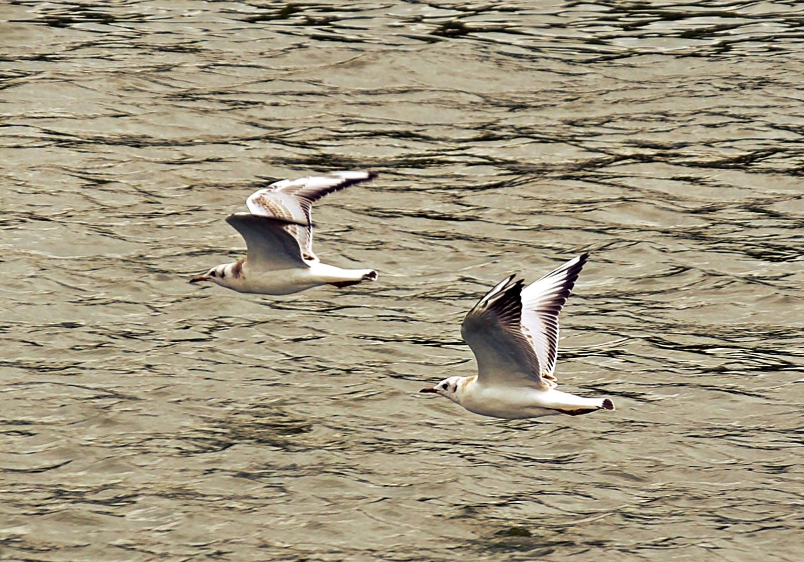 Seagulls flying by nancydev