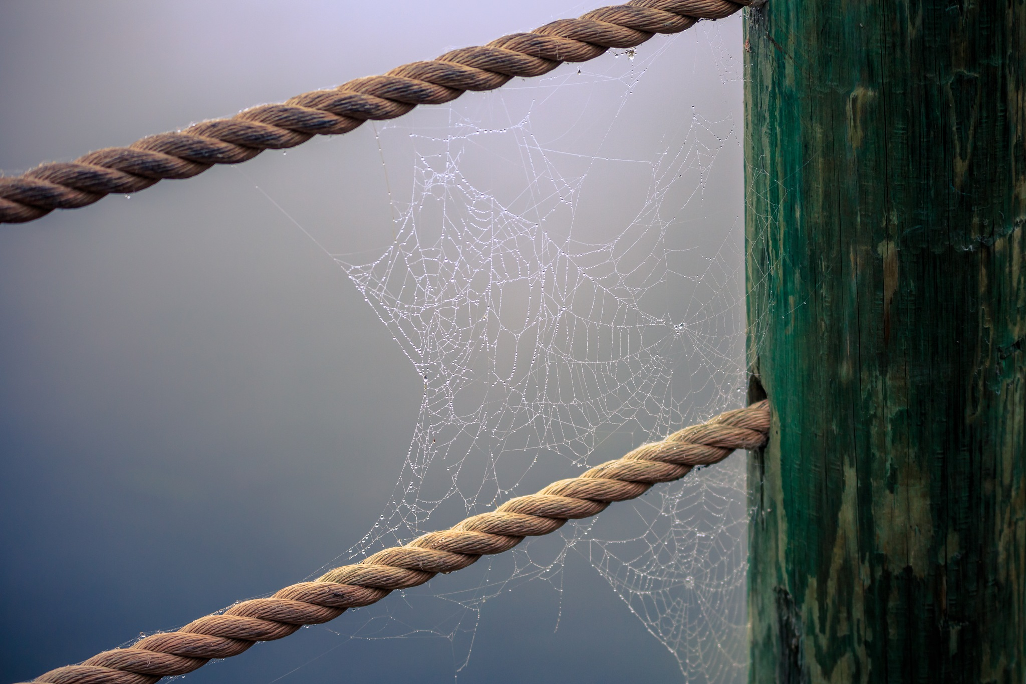 Web by Bryan L. Williams