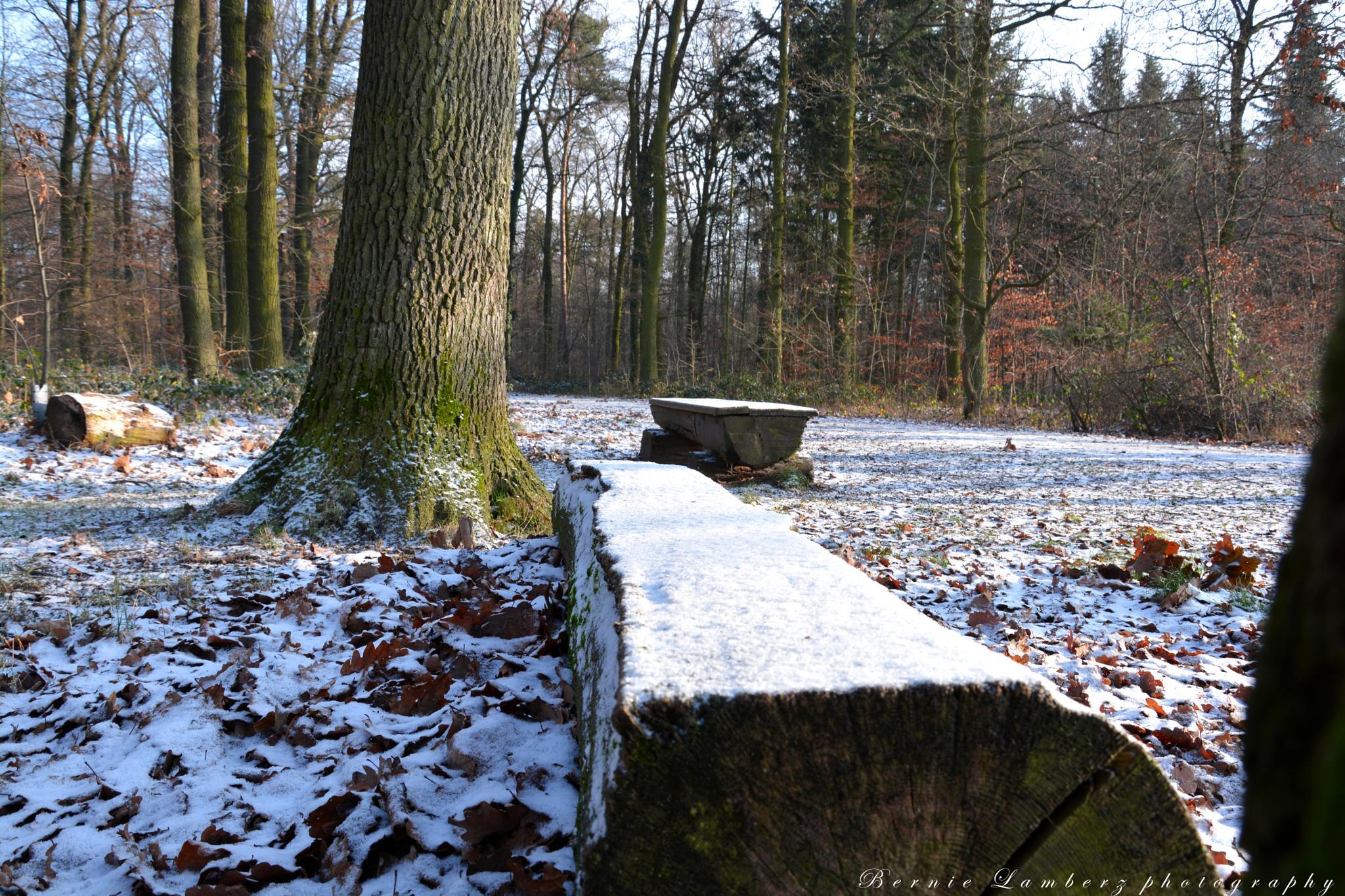 powdered bench by Bernie Lamberz photography
