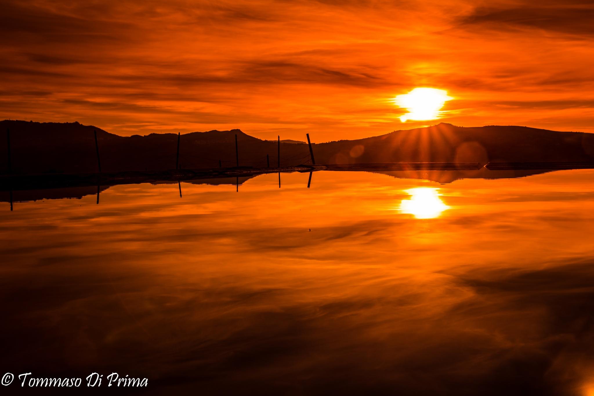 l'alba delle palme by Tommaso