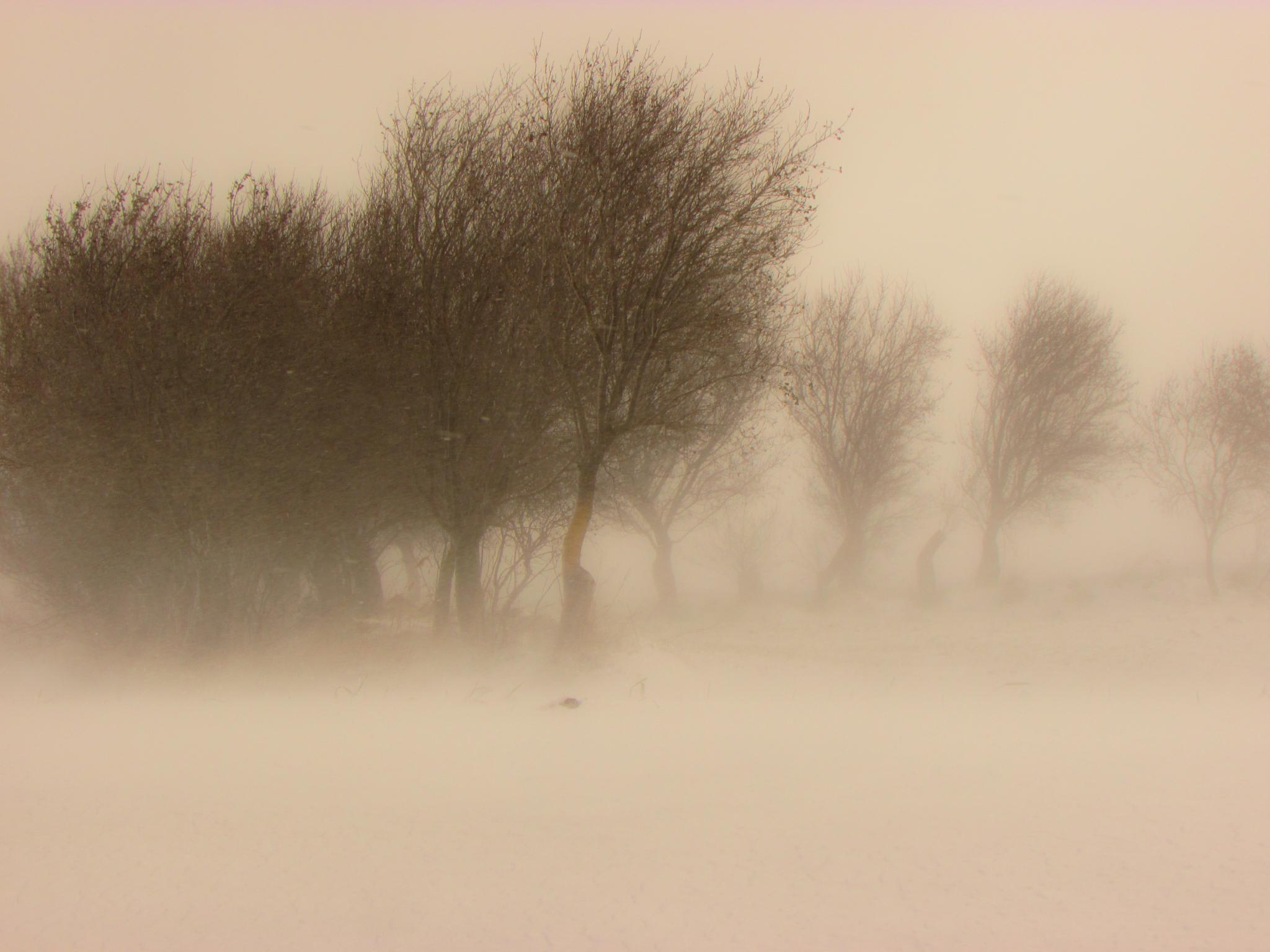 snowstorm by Tommaso