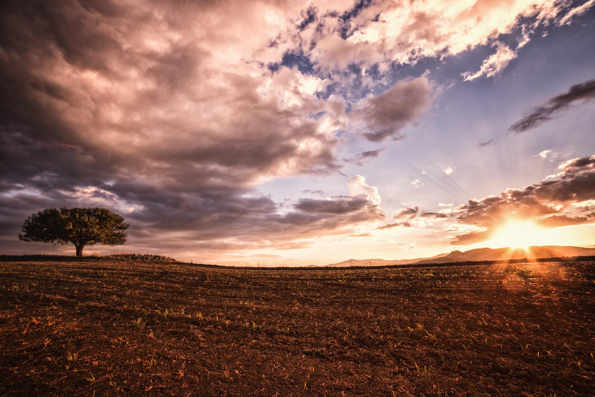 la terra coltivata a grano by Tommaso