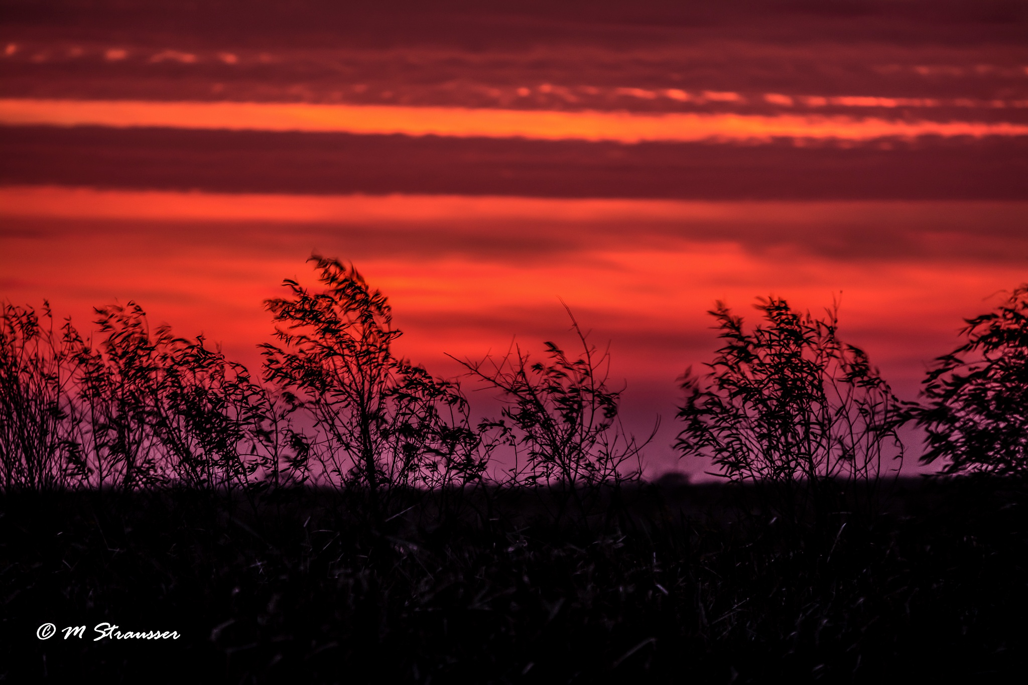 marsh sunrise by MStrausser of the iMage Shack