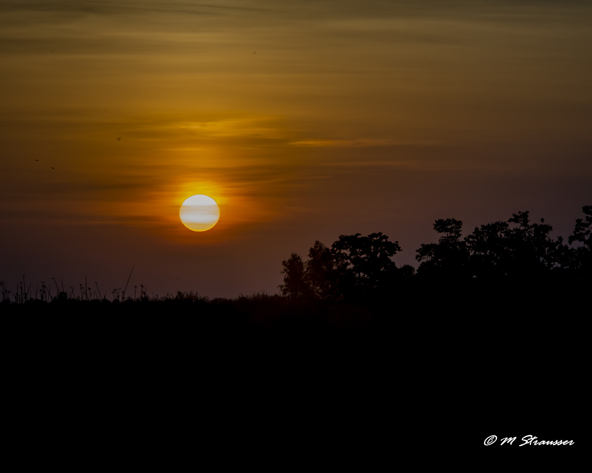 sunrise in the marsh by MStrausser of the iMage Shack