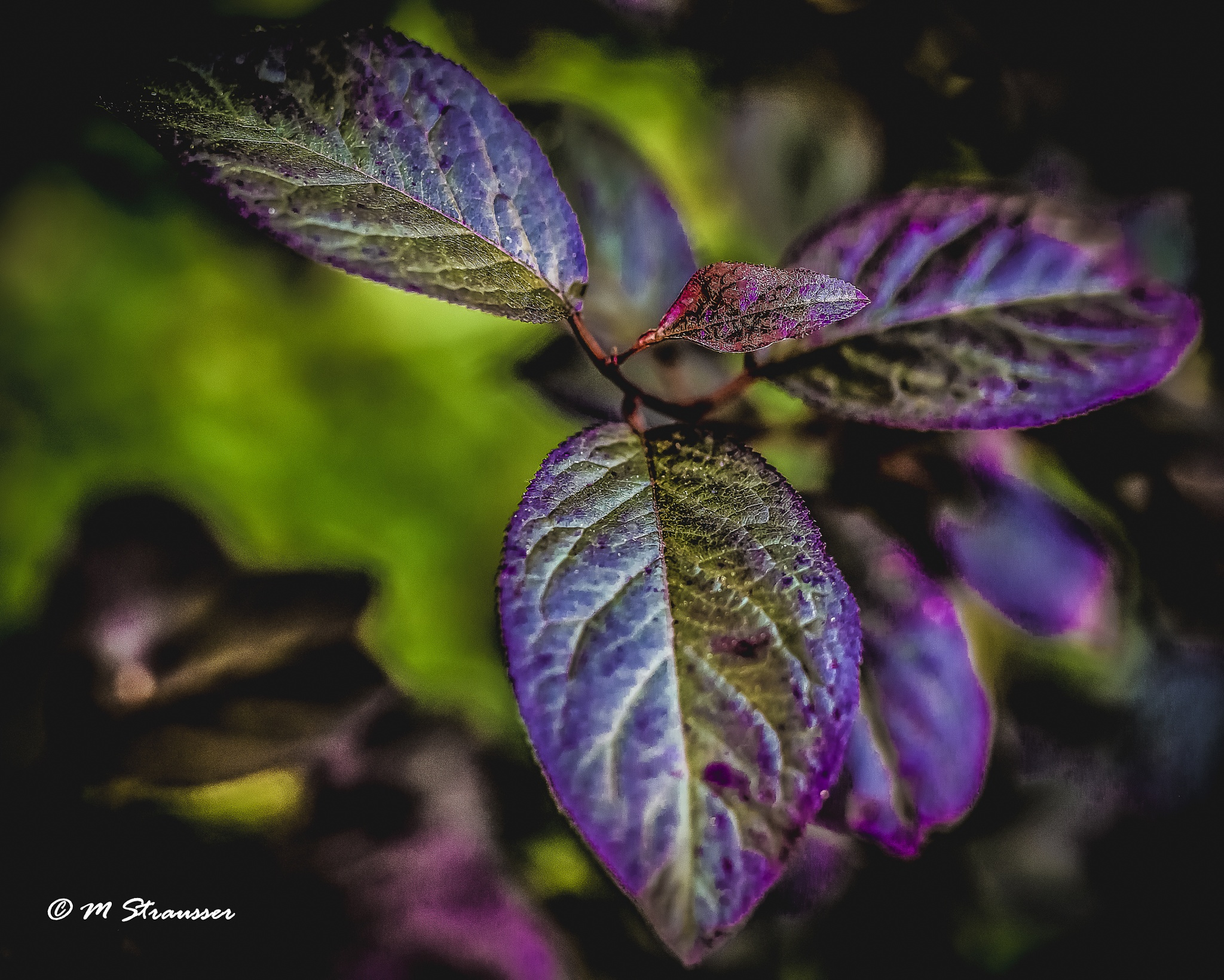 leaves by MStrausser of the iMage Shack