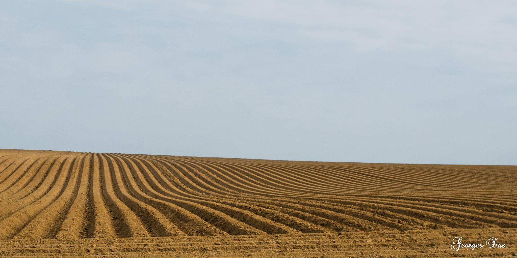 Field by Georges Das