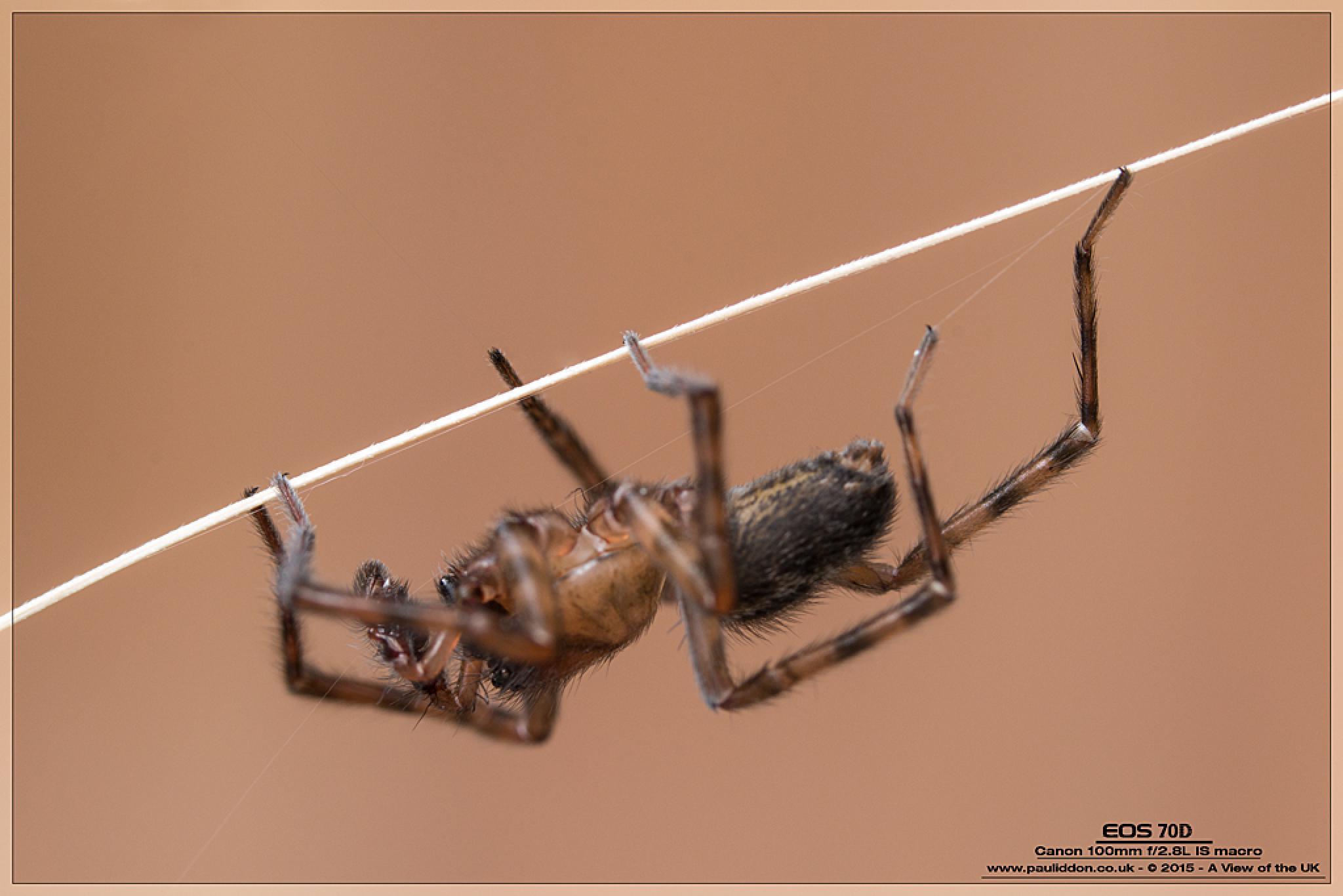 Upside Down Trapeze Artist... by paul.iddon.9