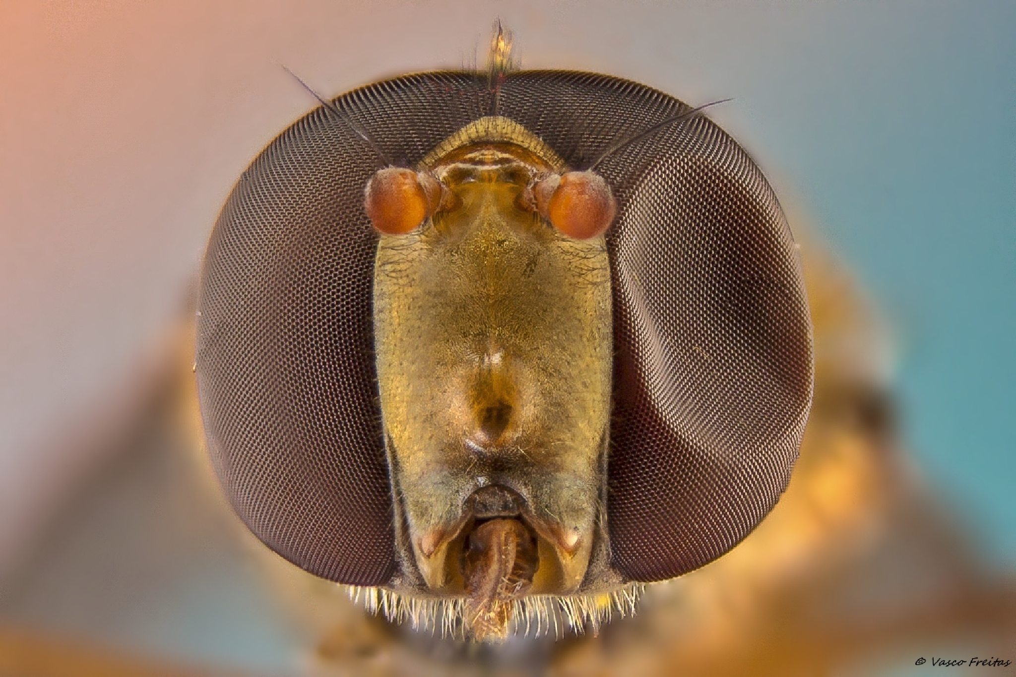 The black eye from insect world by Thunder