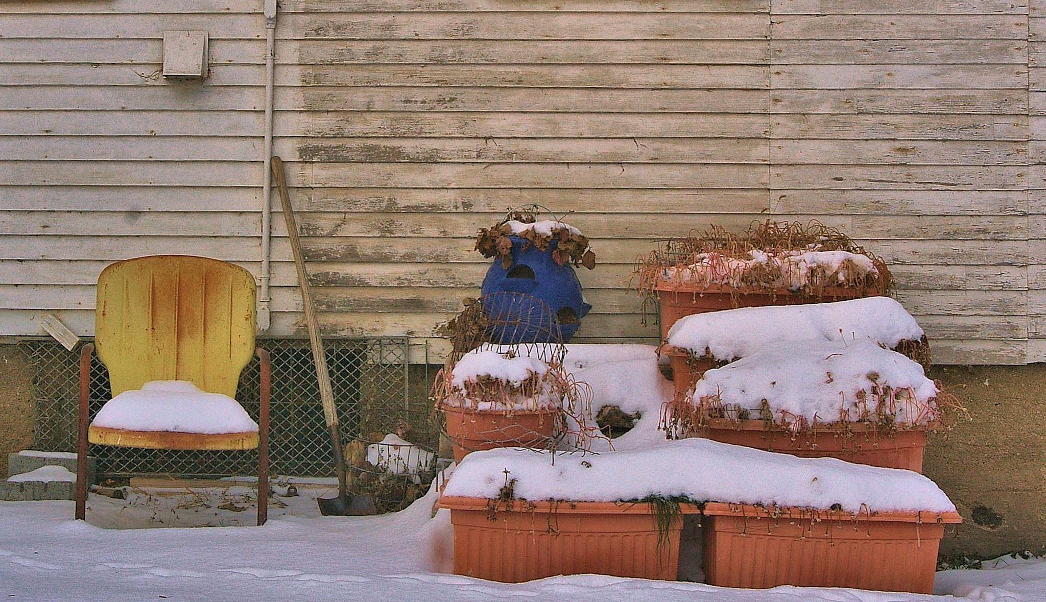 Rusty yellow Chair, frozen flowers by Terri Lyn Jolly (terridactyle)