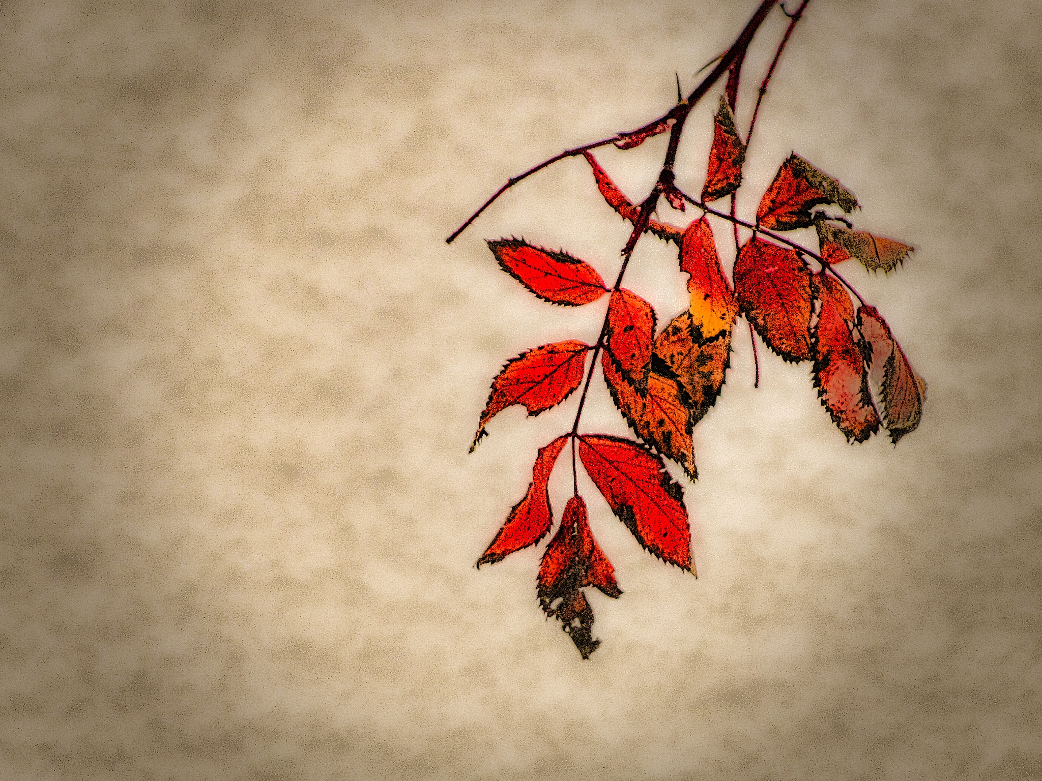 Old Leaves  by Brian Hannah