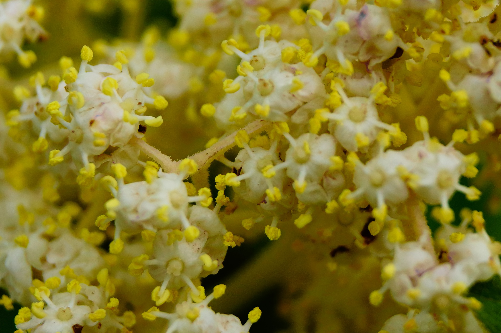 Flower Burst by Brian Hannah