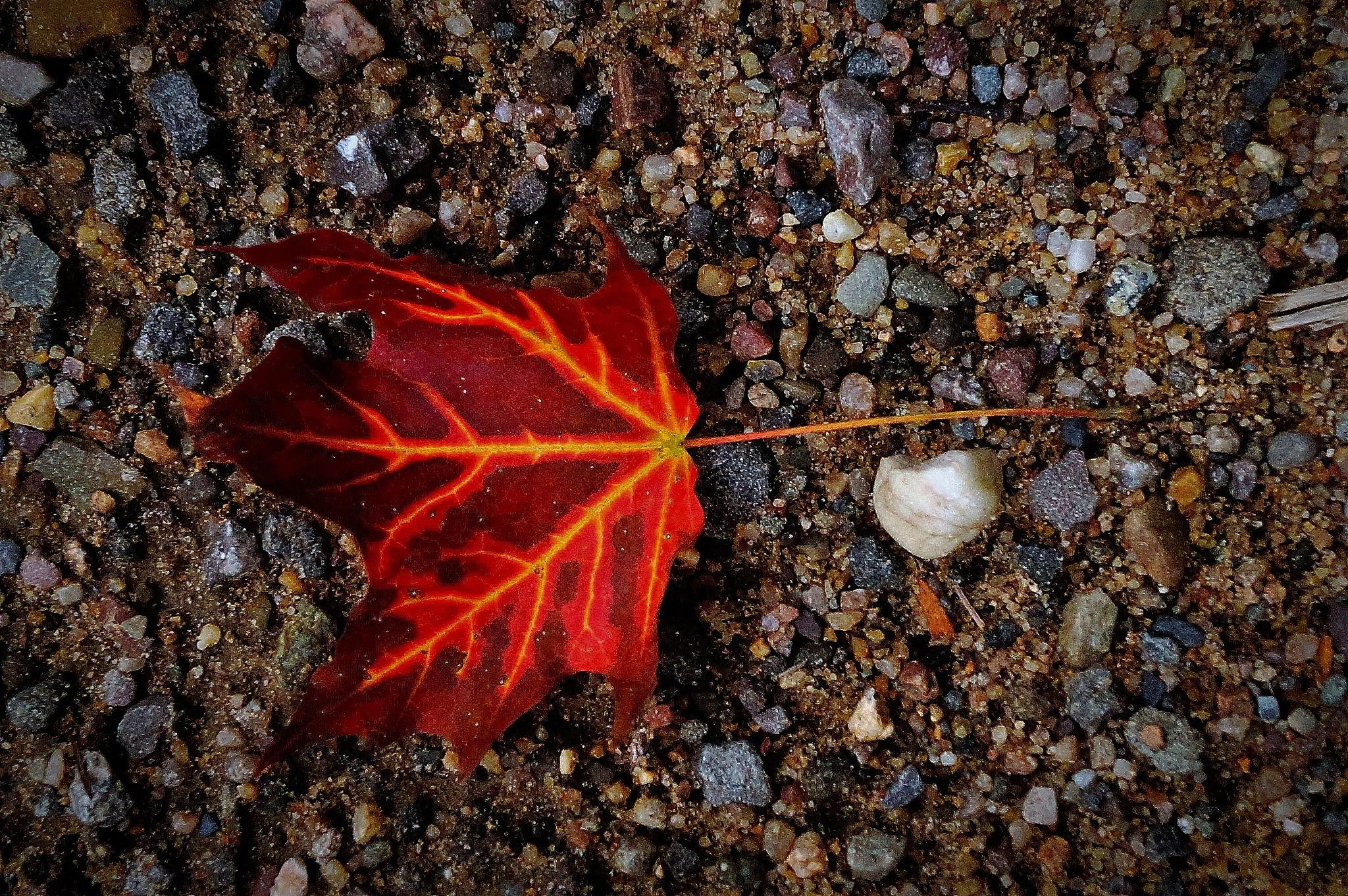 Fiery Leaf Fractal  by Brian Hannah