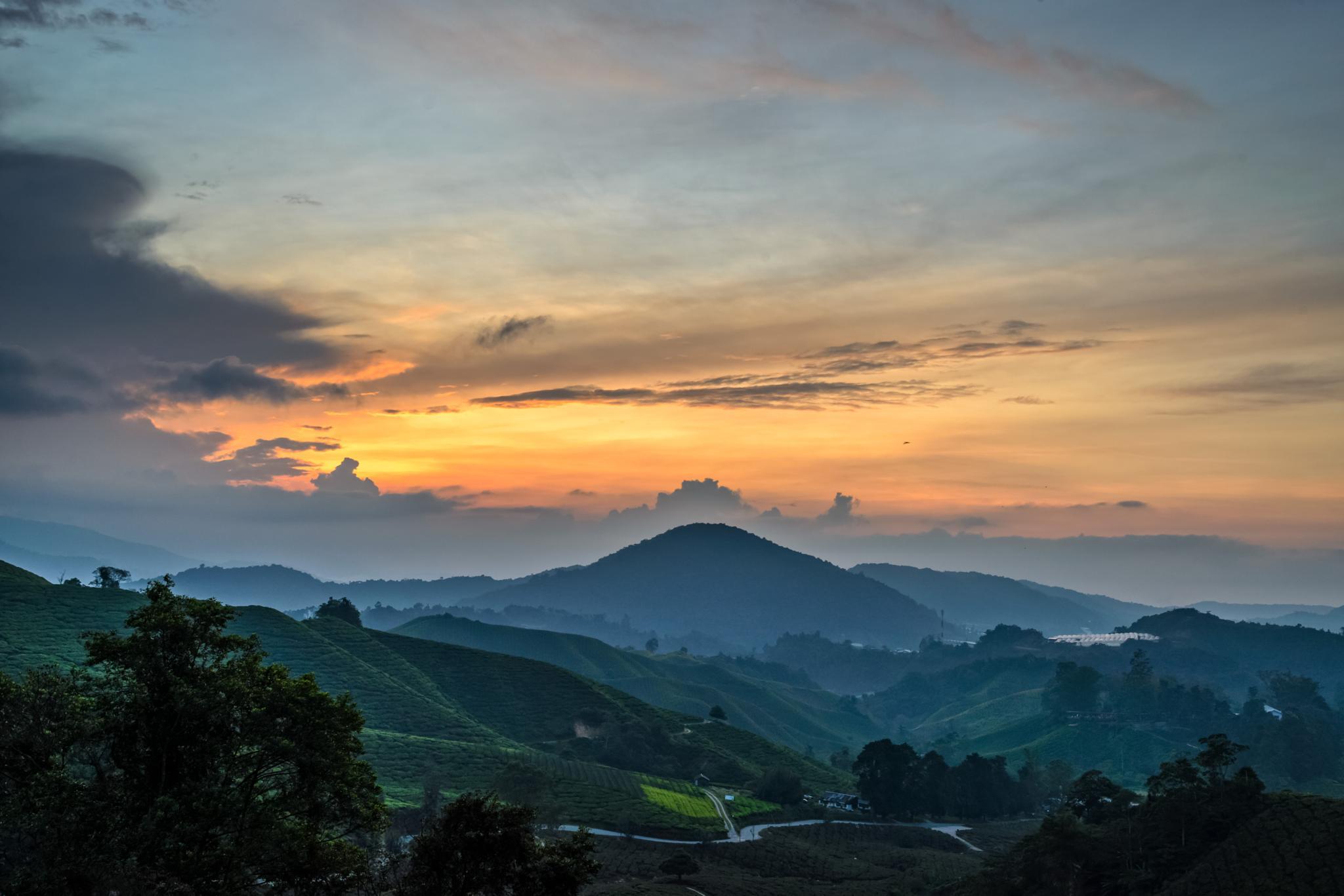 Photo in Landscape #sunrise #morning #tea #farm