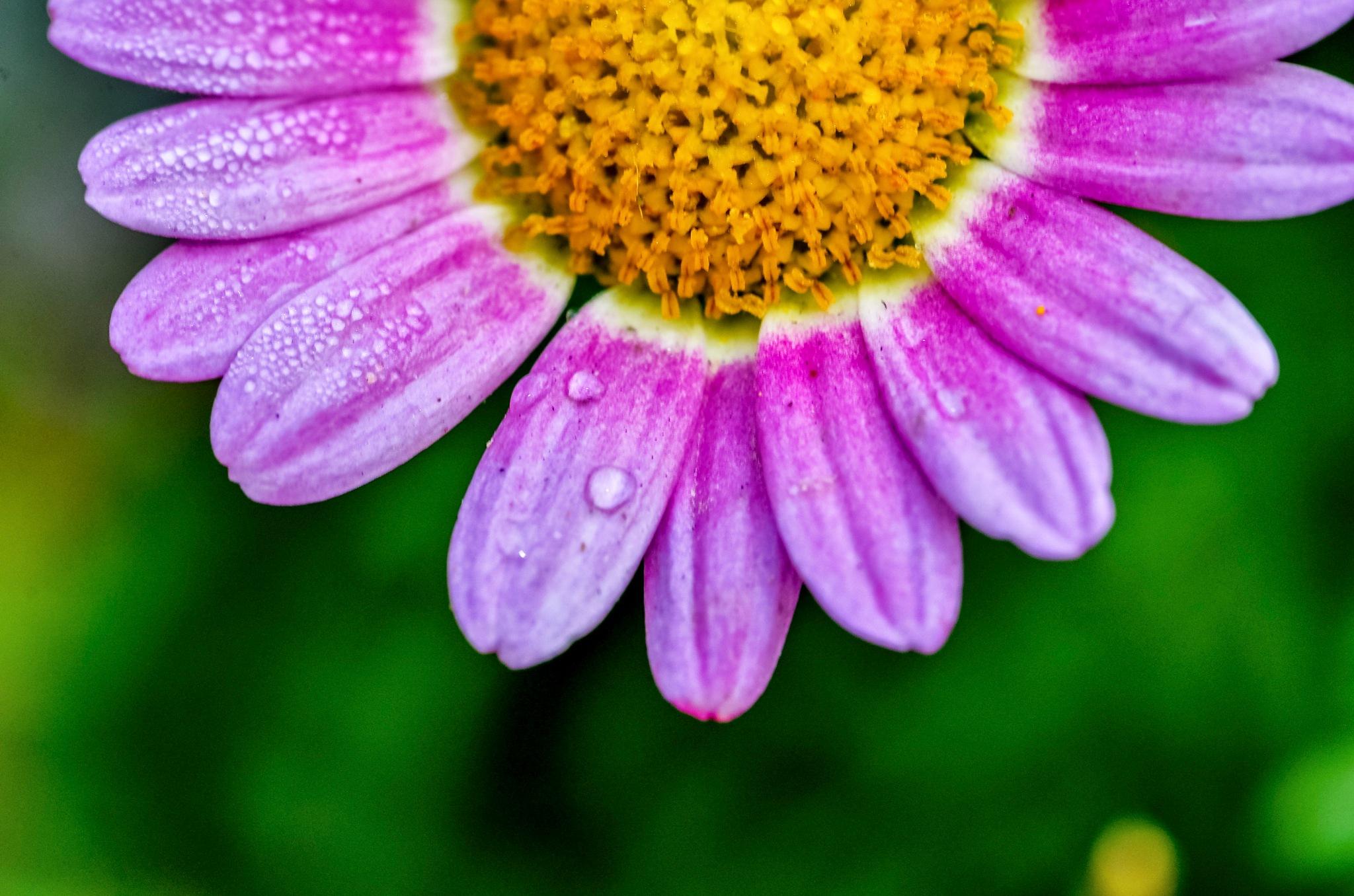 tiny flower by garywlyip