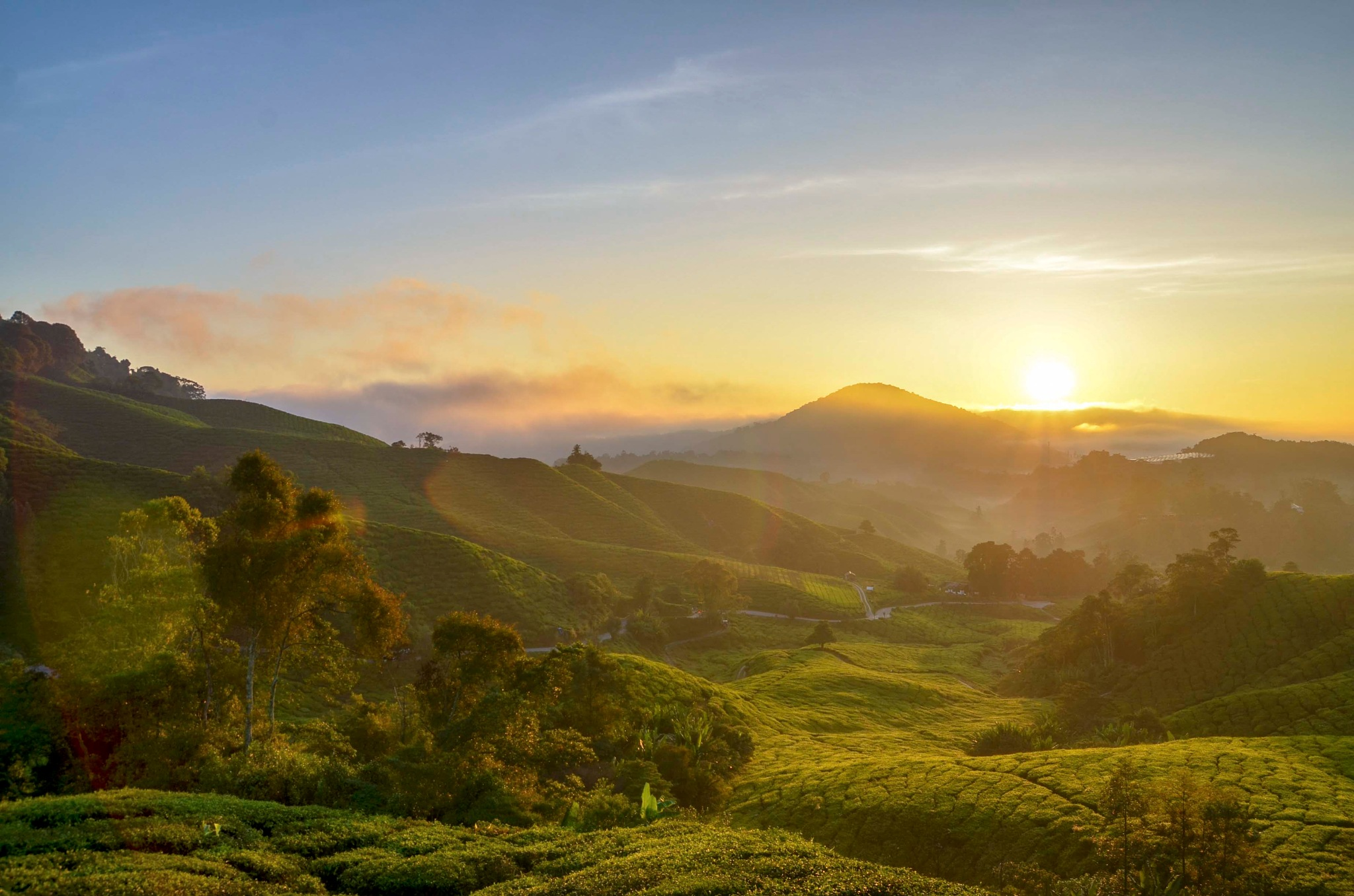sunrise at tea farm by garywlyip