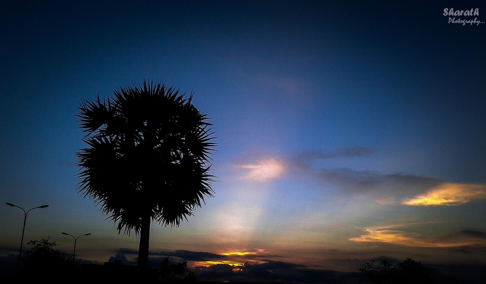 Good Evening by Sharath Photographz