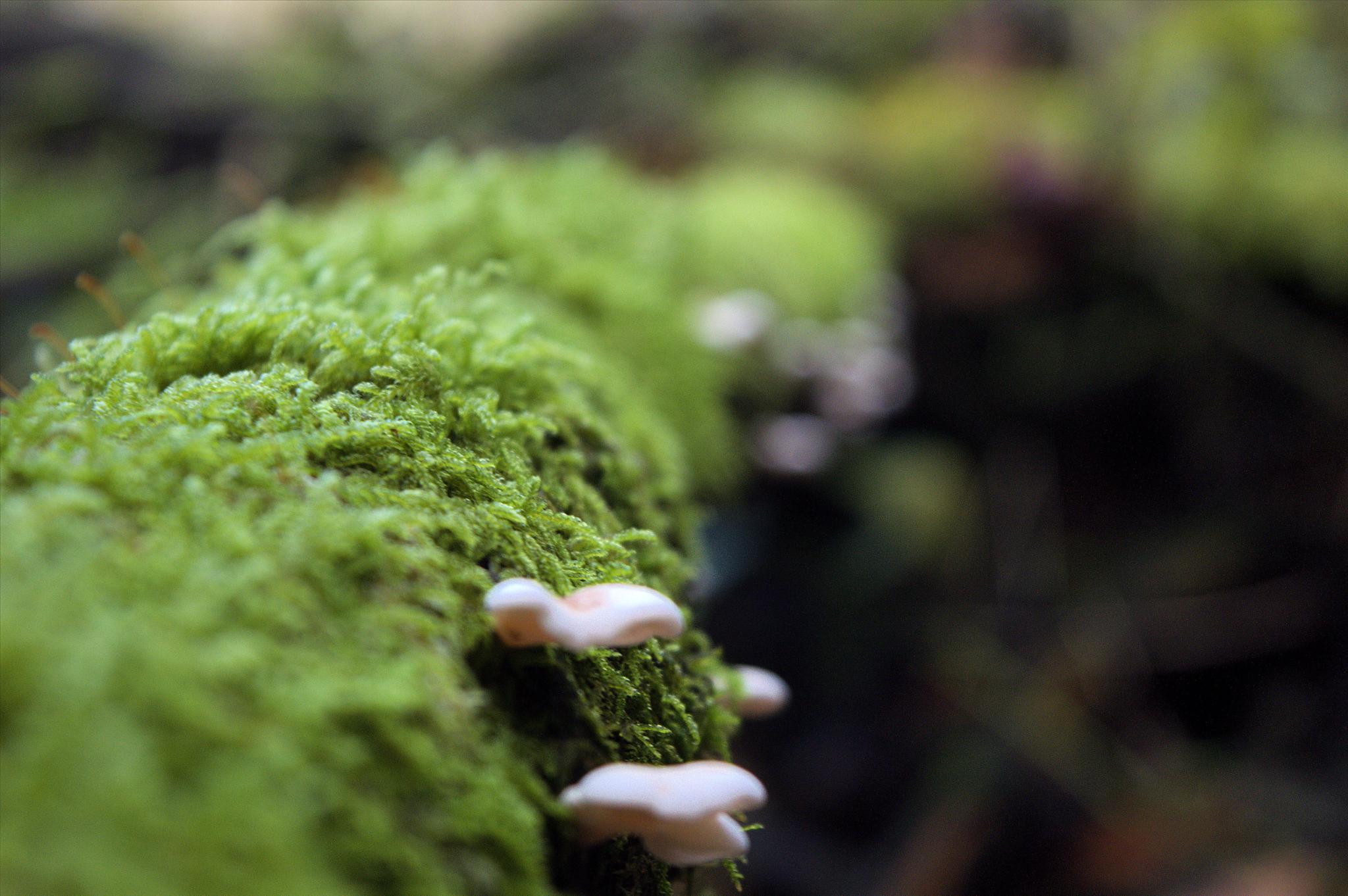 Mushroom Steps  by Twilson7576