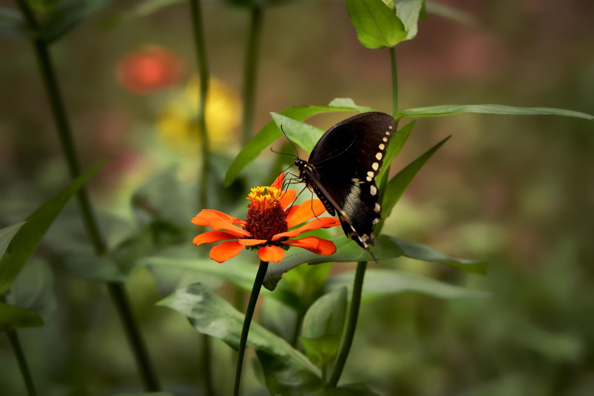 Black on Orange by Cherie Steele