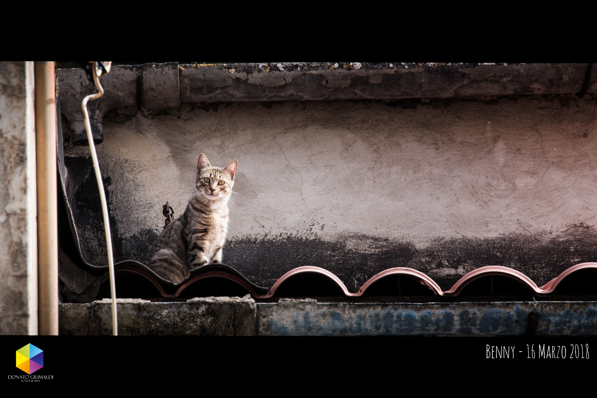 Benny the cat by deegee65