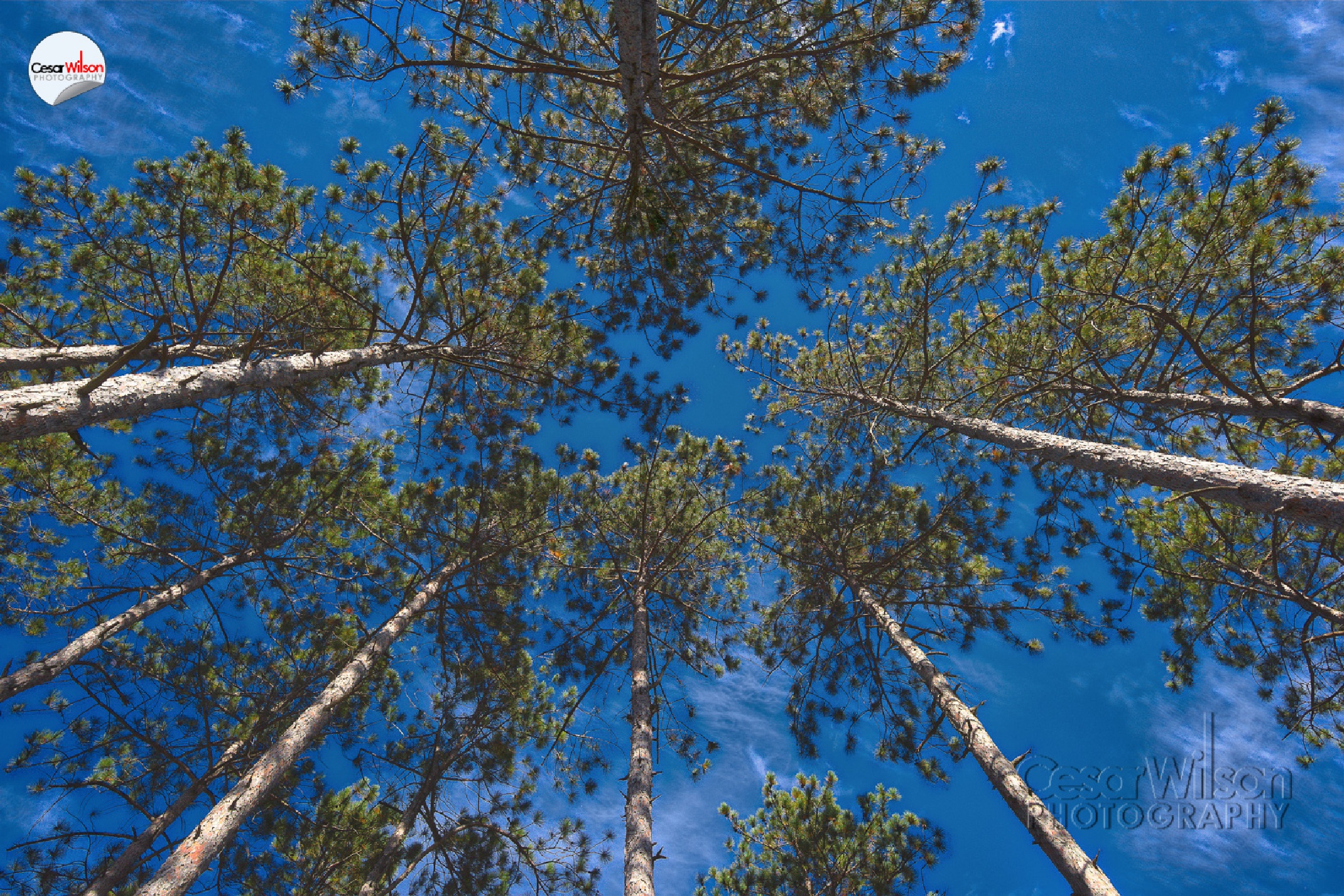 Look up nature by Cesar Wilson