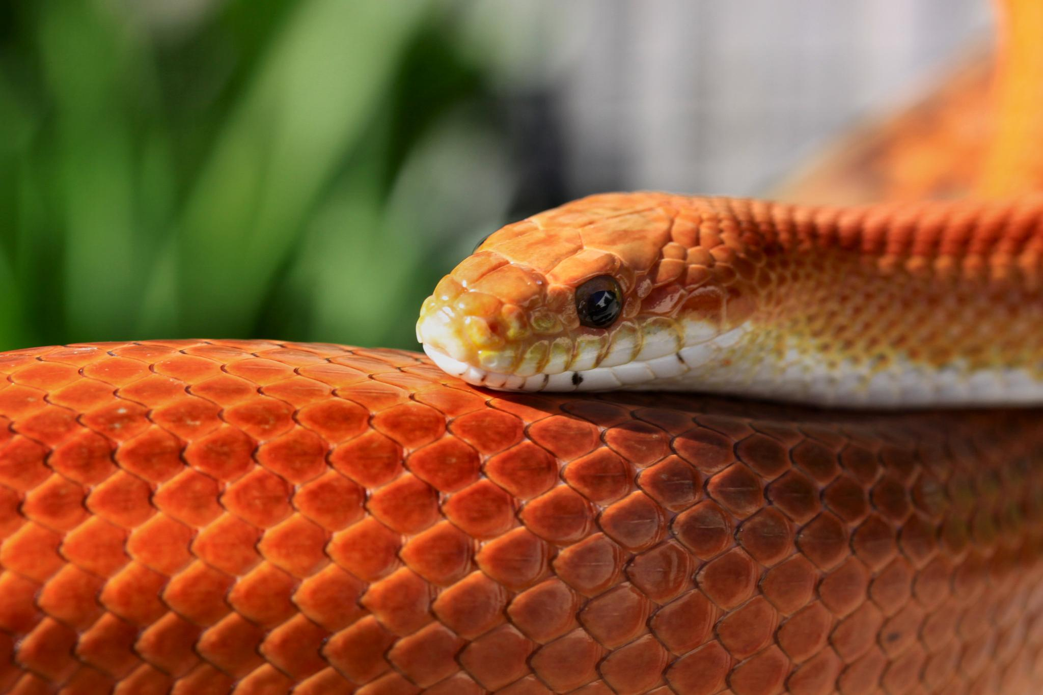 Photo in Nature #snake #reptile #animal #macro'