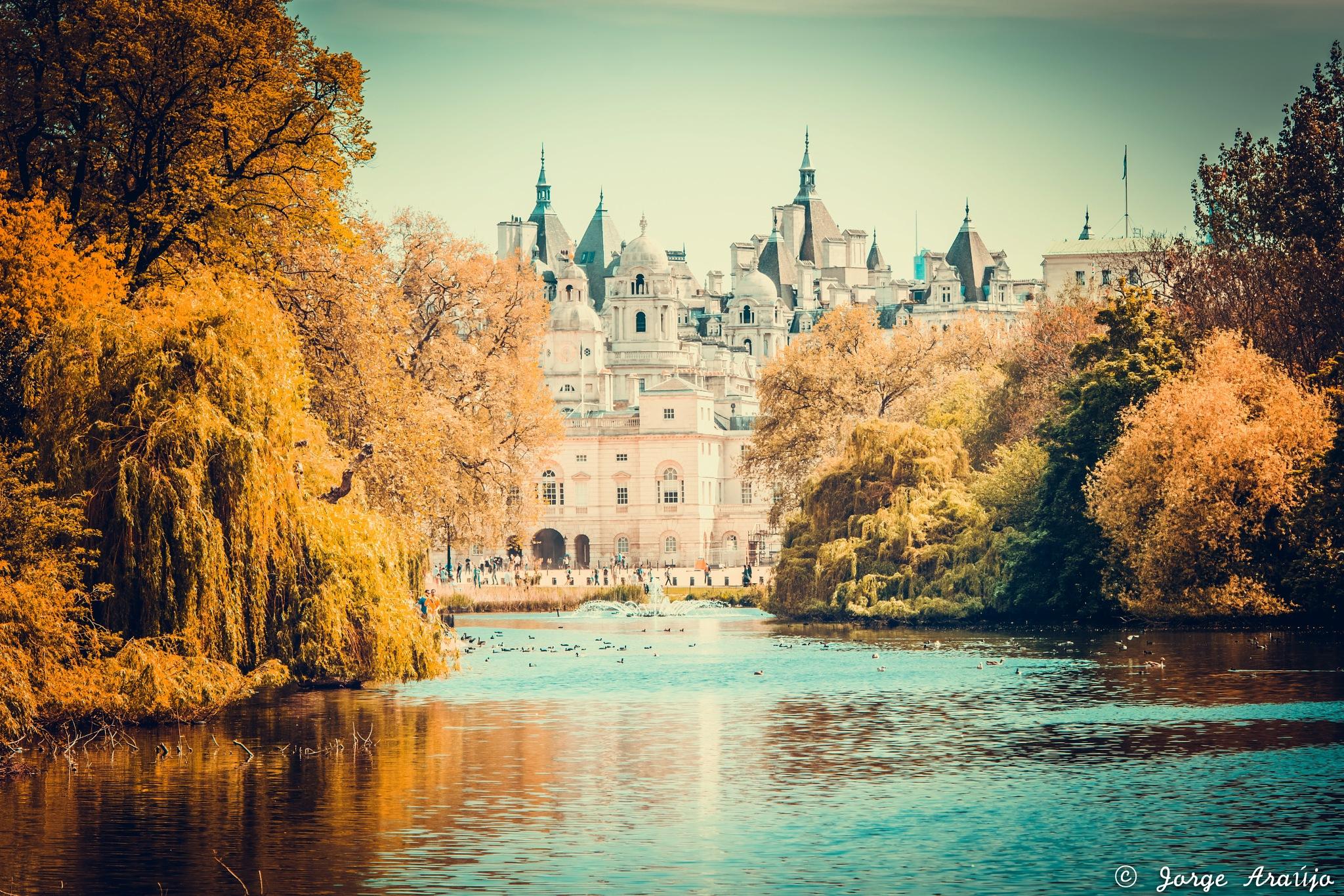 Autumn colors by Jorge Araújo