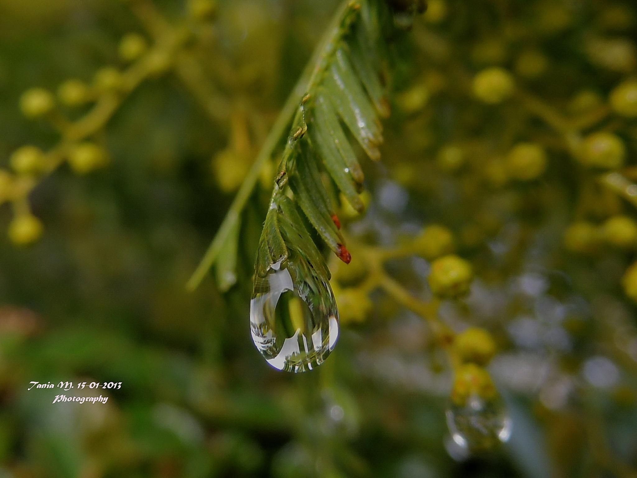 Tears! by tania.mihalcea.7
