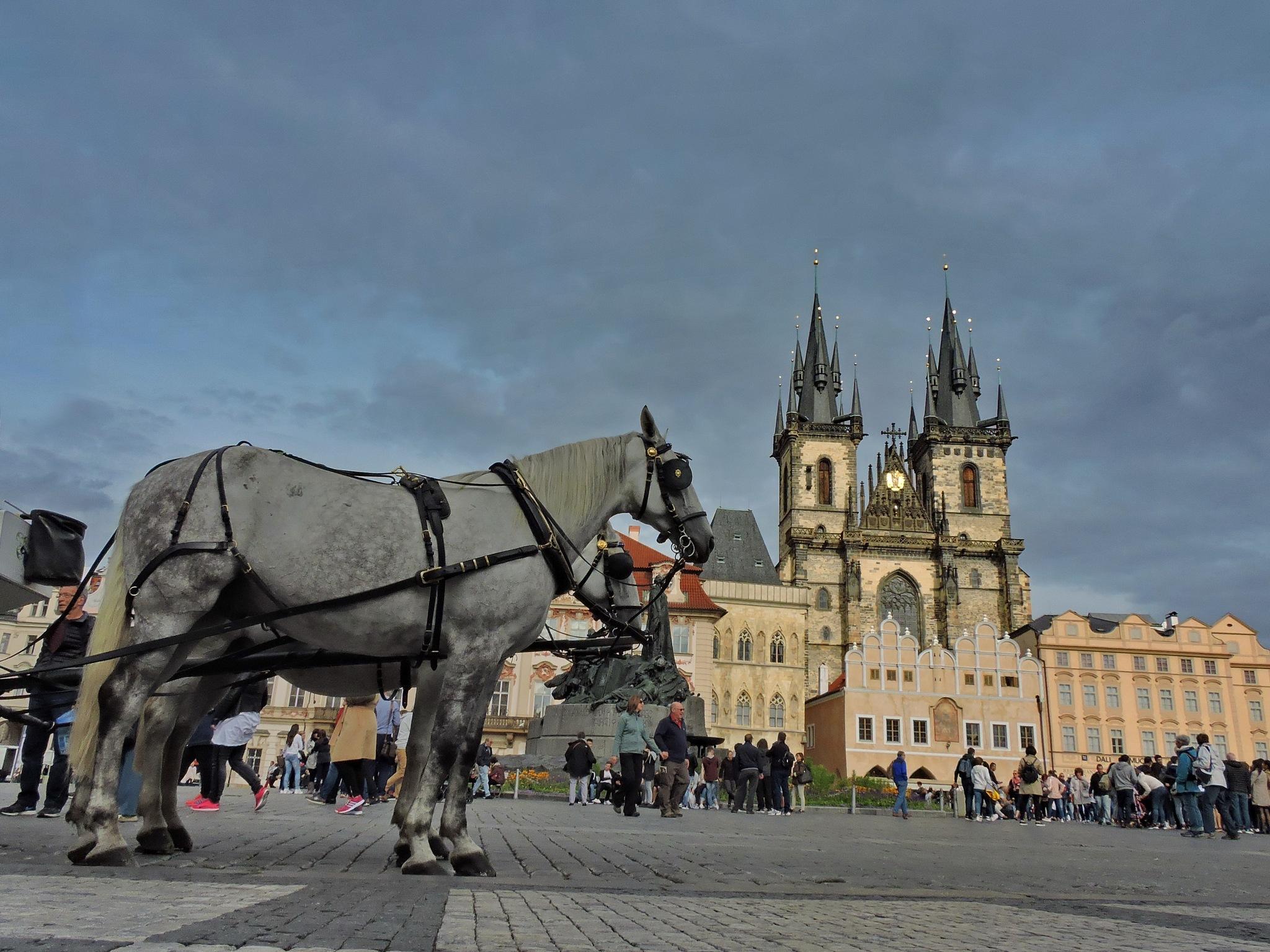 Praga! by tania.mihalcea.7