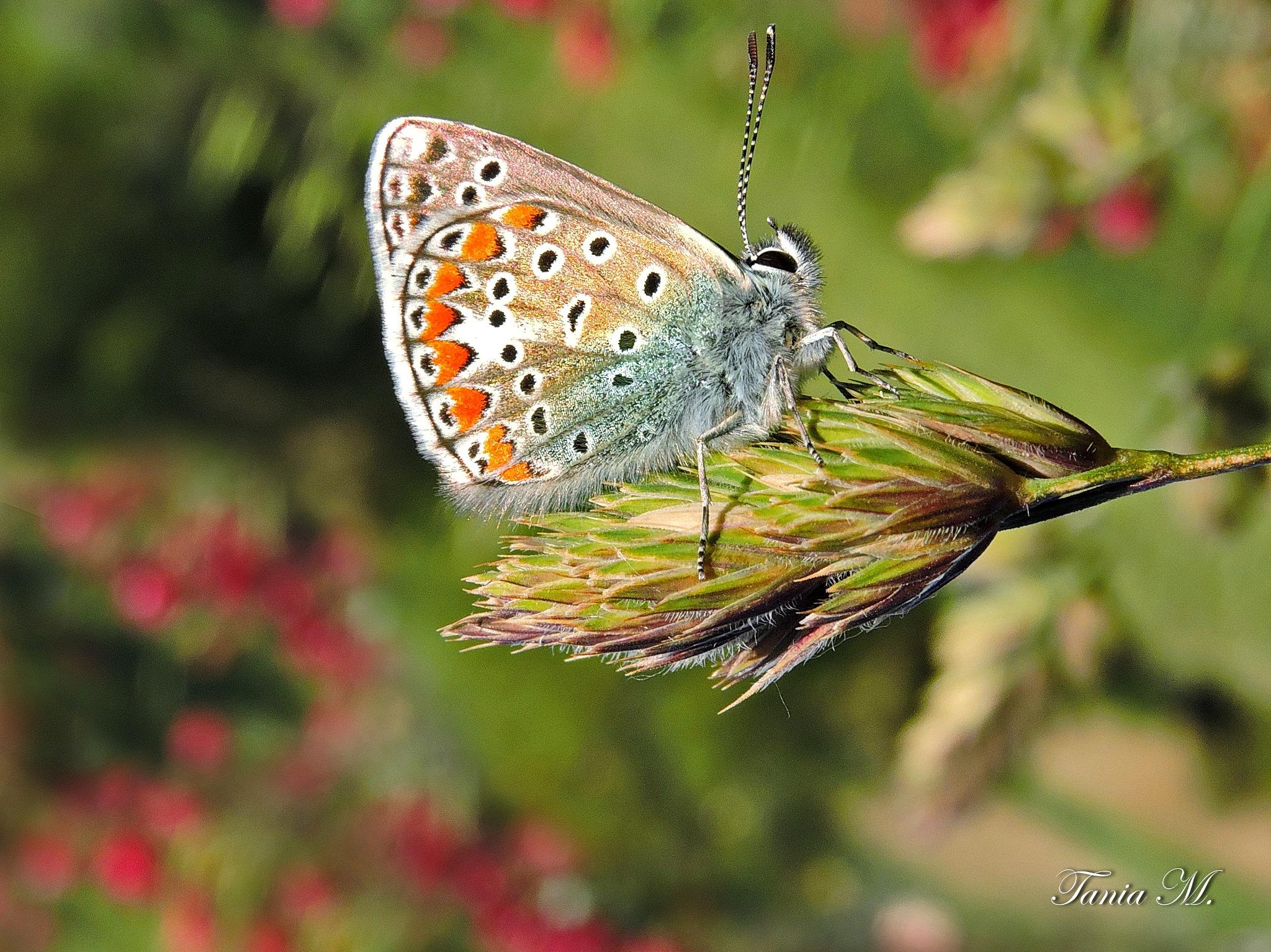 Doar eu...si un fluture! by tania.mihalcea.7