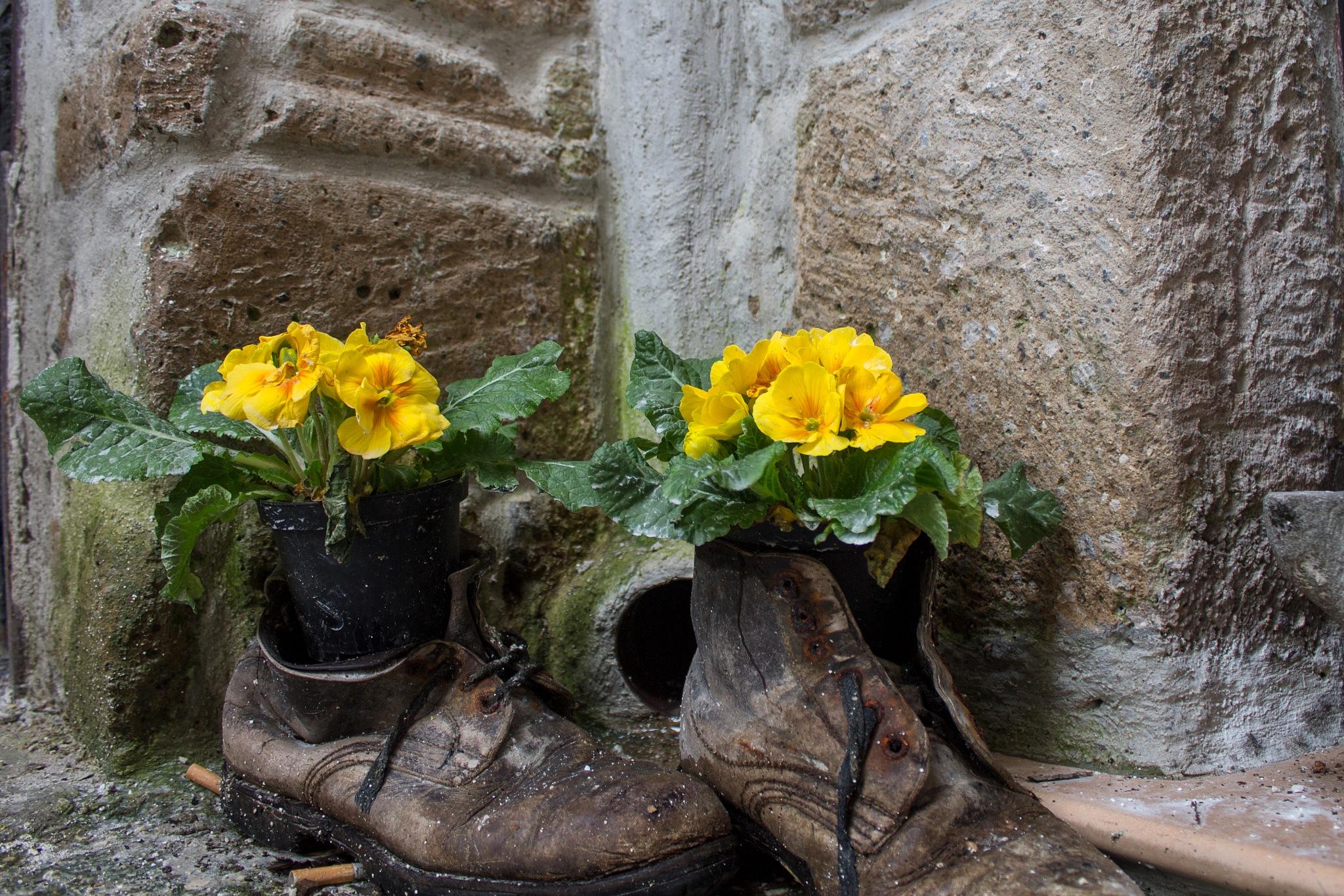 Primule & vecchi scarponi by Salvatore Bertolino