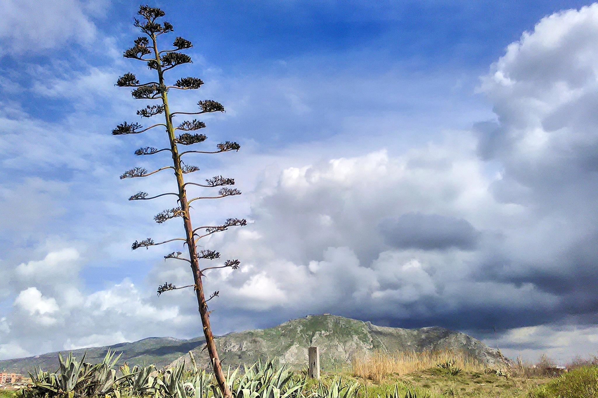Exploit della Natura: il fiore dell'agave by Salvatore Bertolino