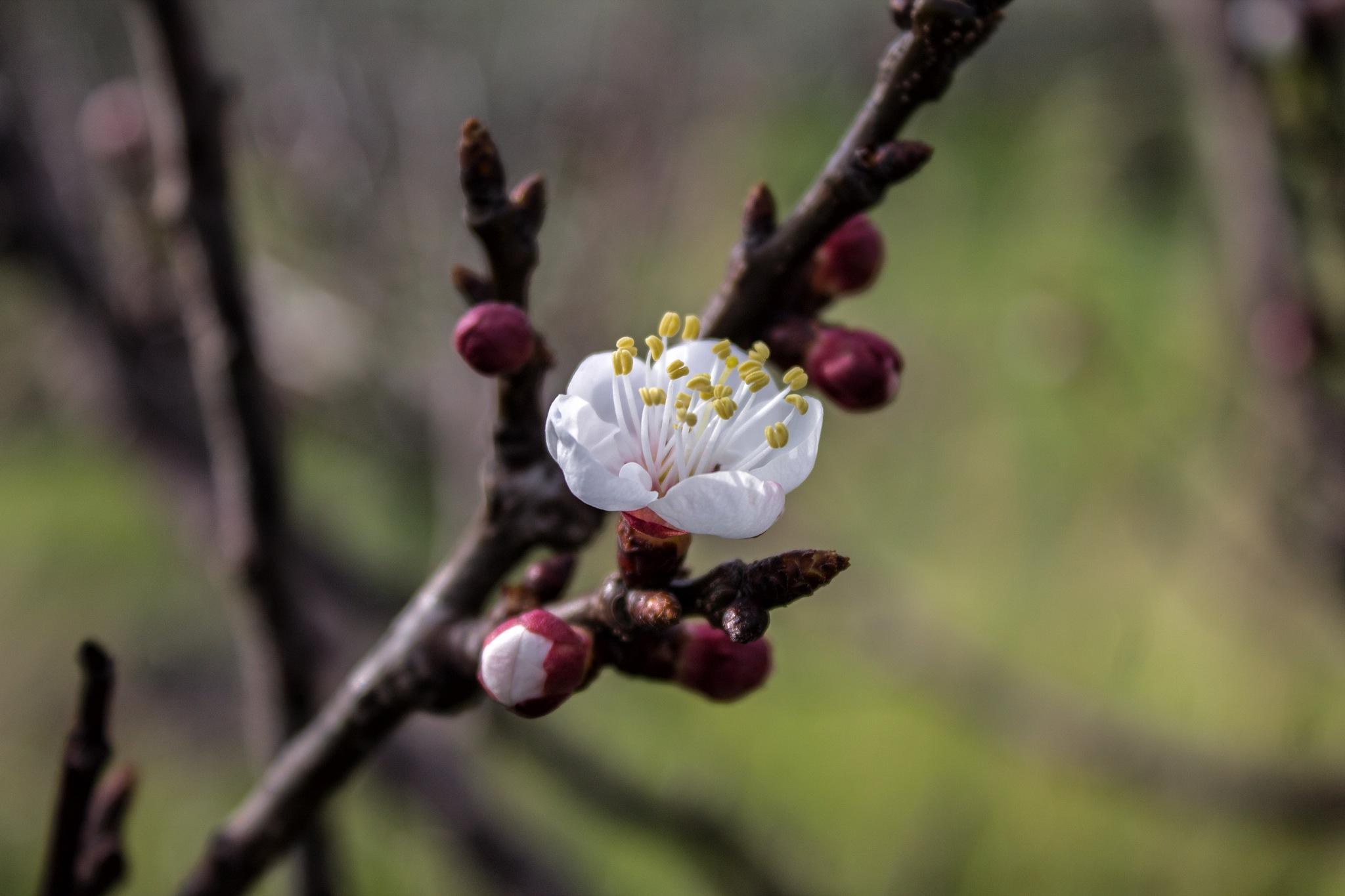 Primavera nell'aria... by Salvatore Bertolino