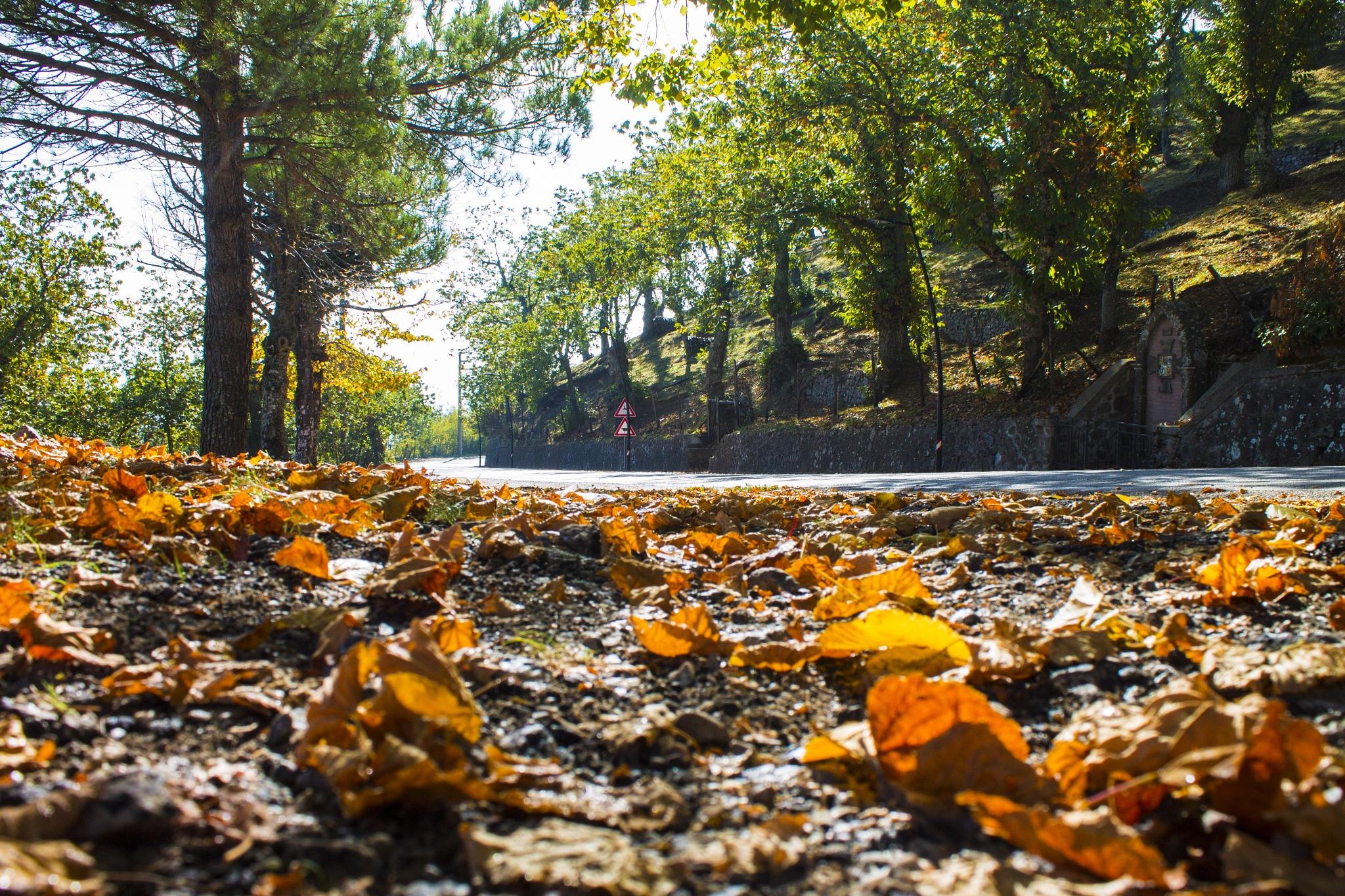 Autumn by Salvatore Bertolino