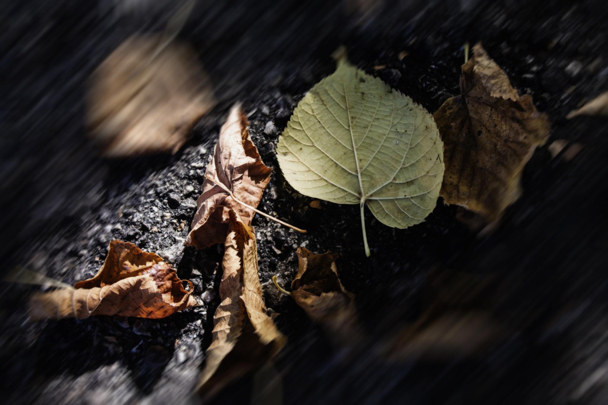 Foliage by Salvatore Bertolino