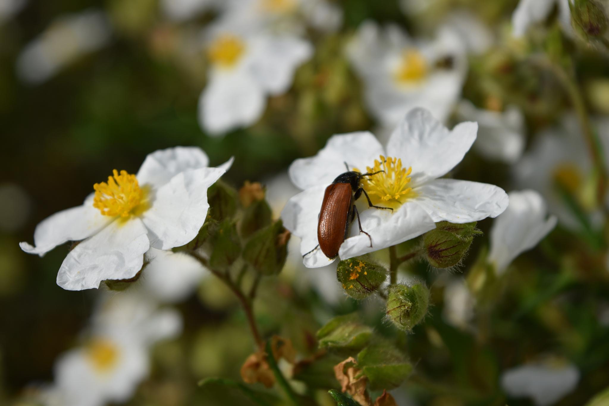 ancora primavera by ecauli1