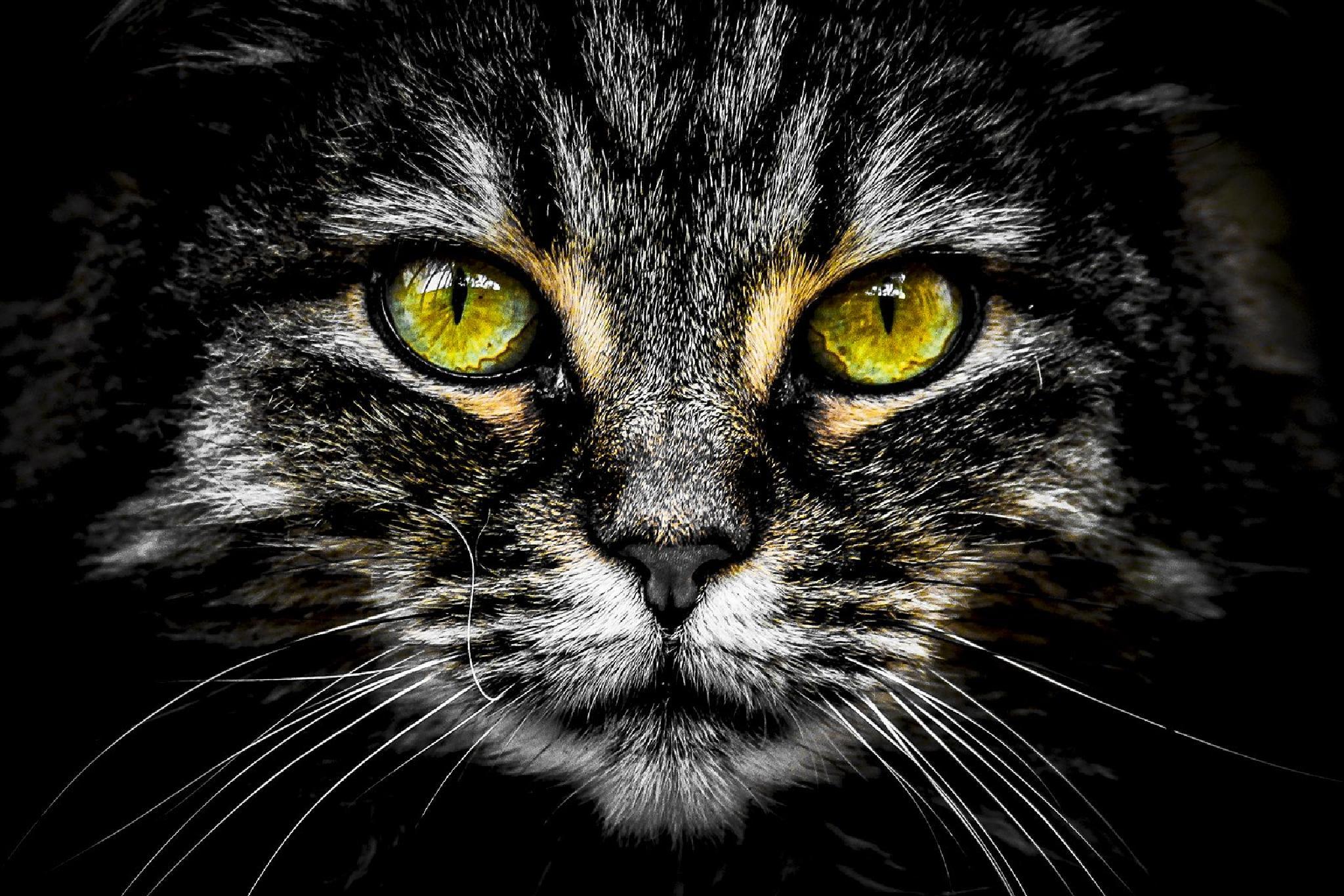 Cat's eyes by DonatoRomagnuolo