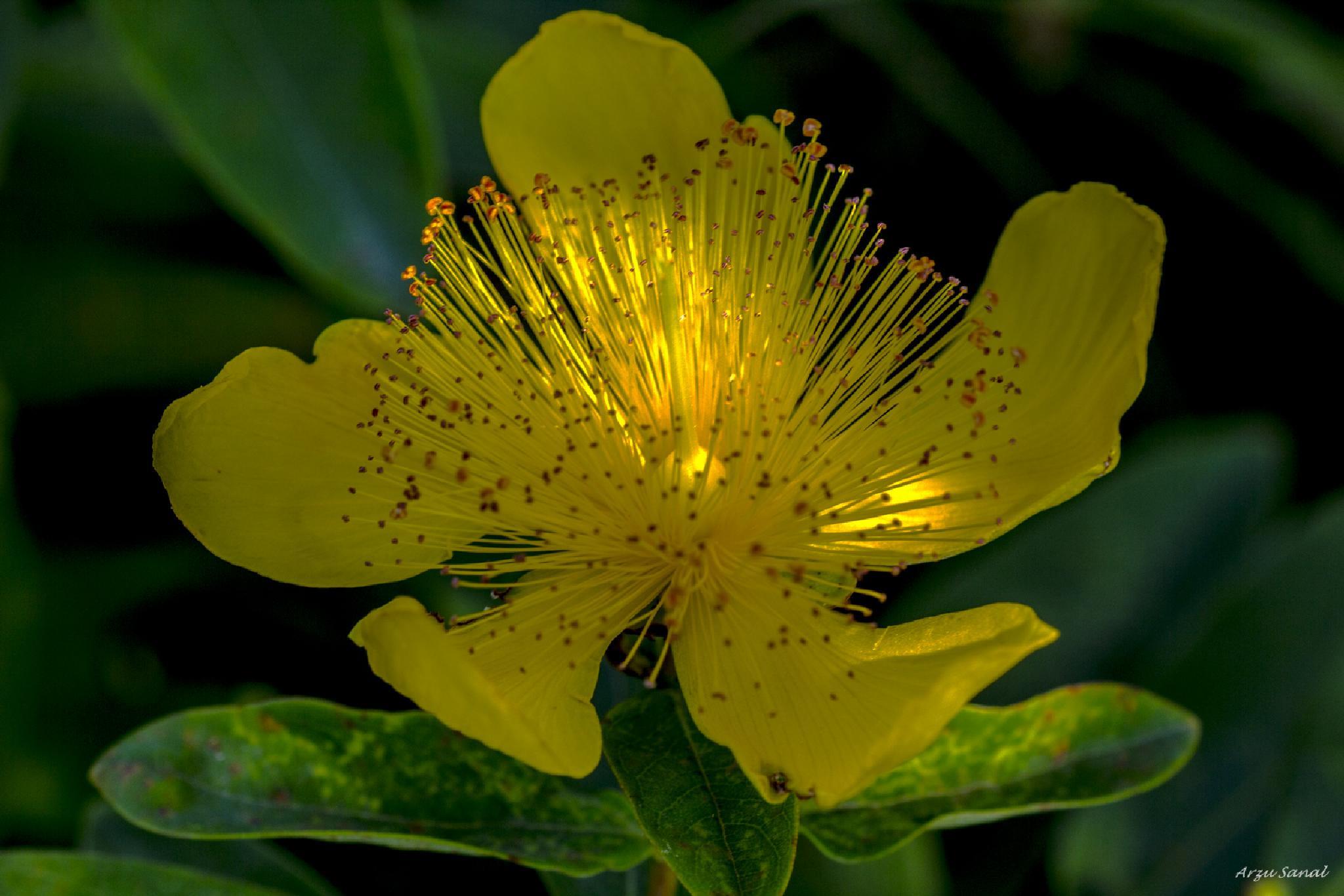Yellow ... ... ... by Arzu SANAL