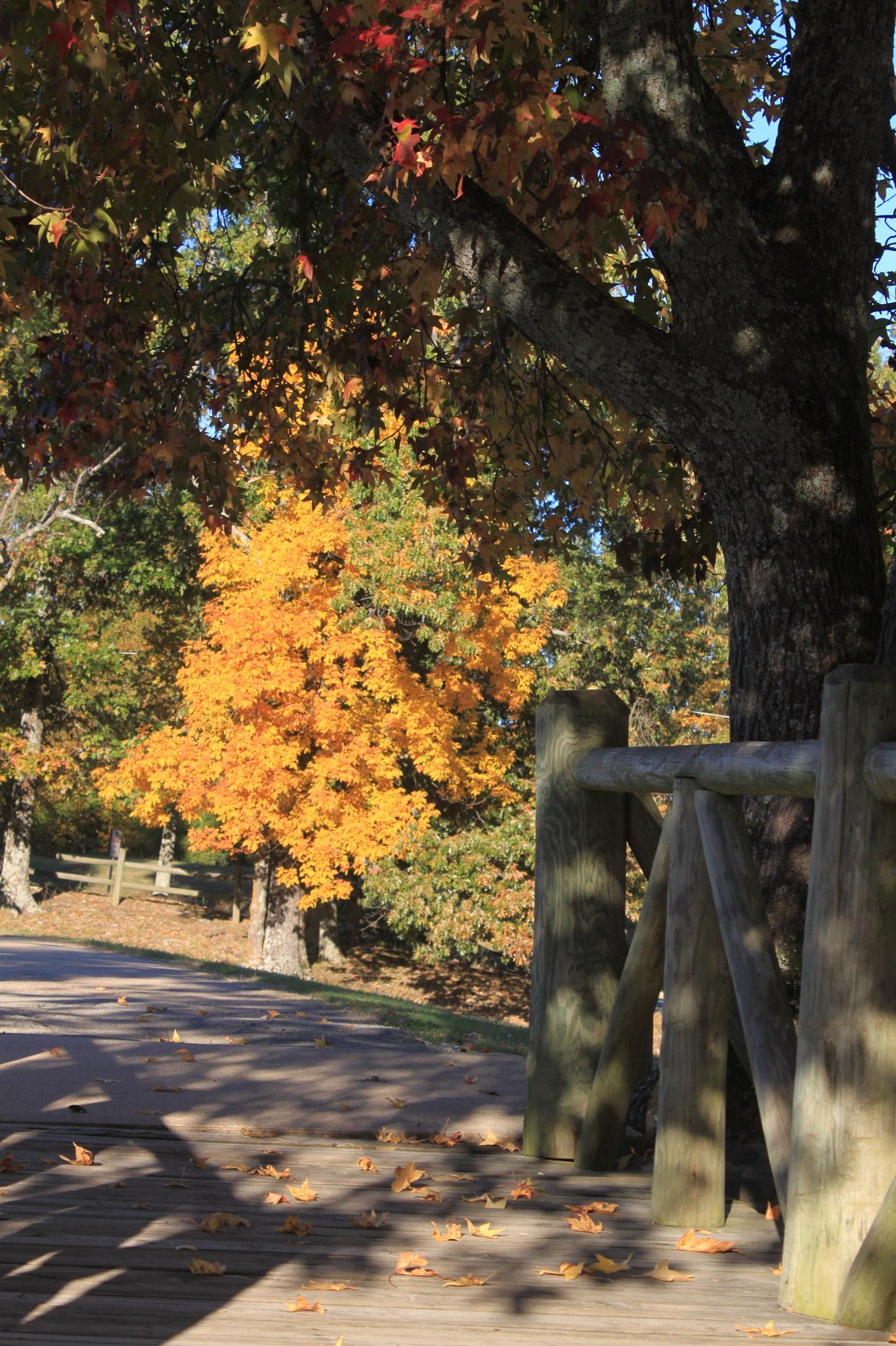 Fall in Arkansas by Dave.Wanner.DWP
