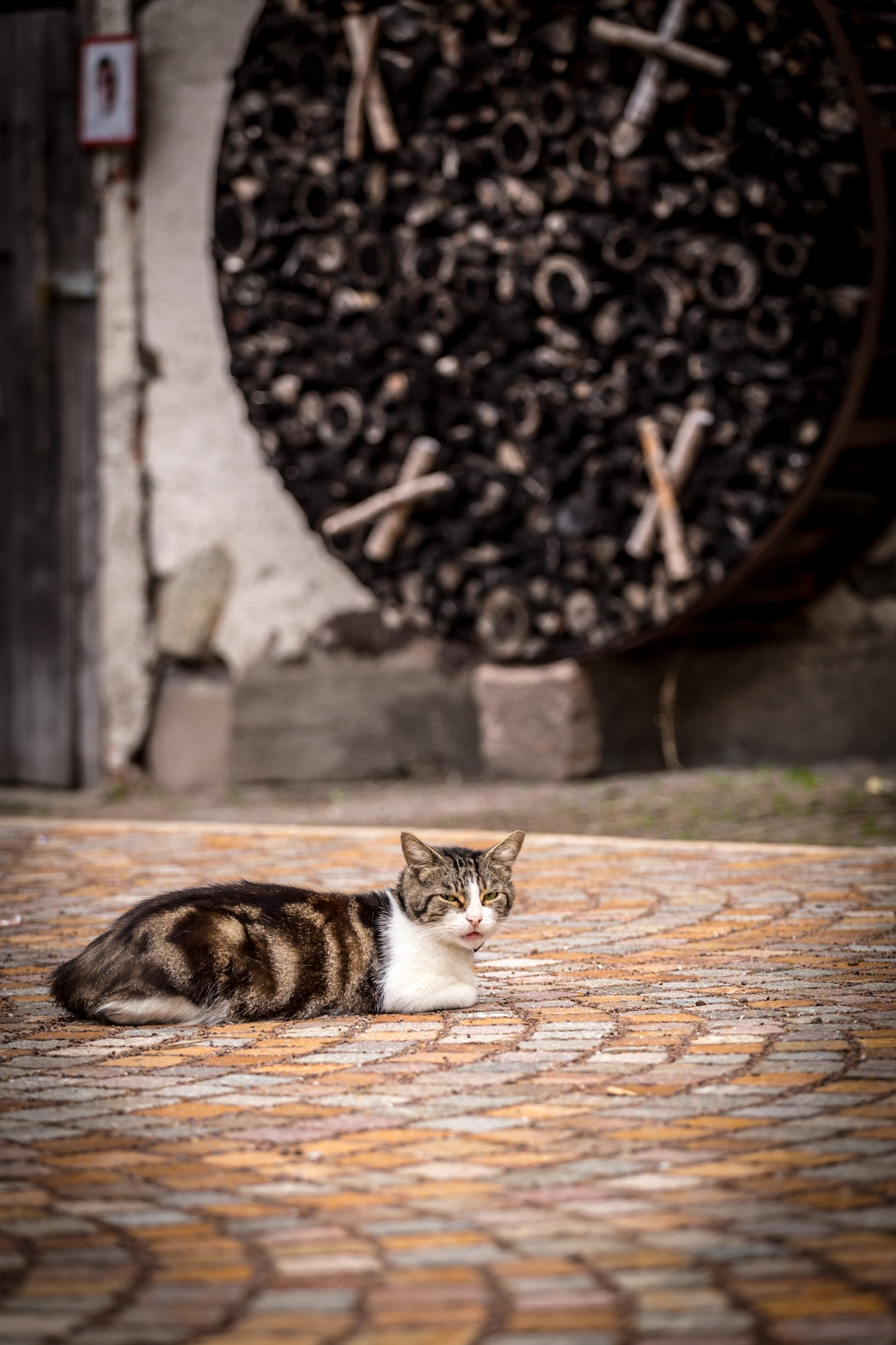 The bored cat !!! by cosandy