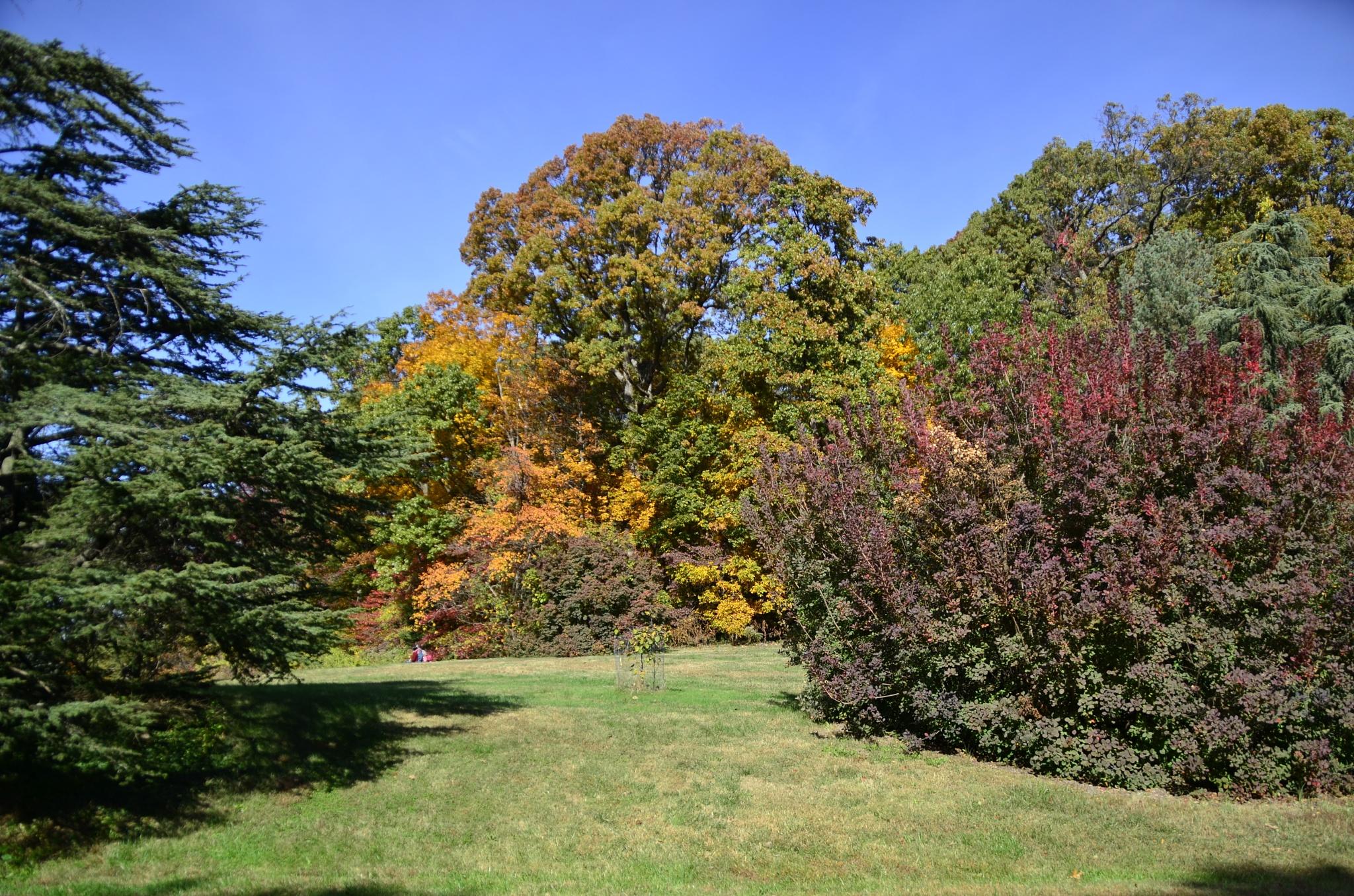 Washington DC National Arboretum  by melvin.waldon