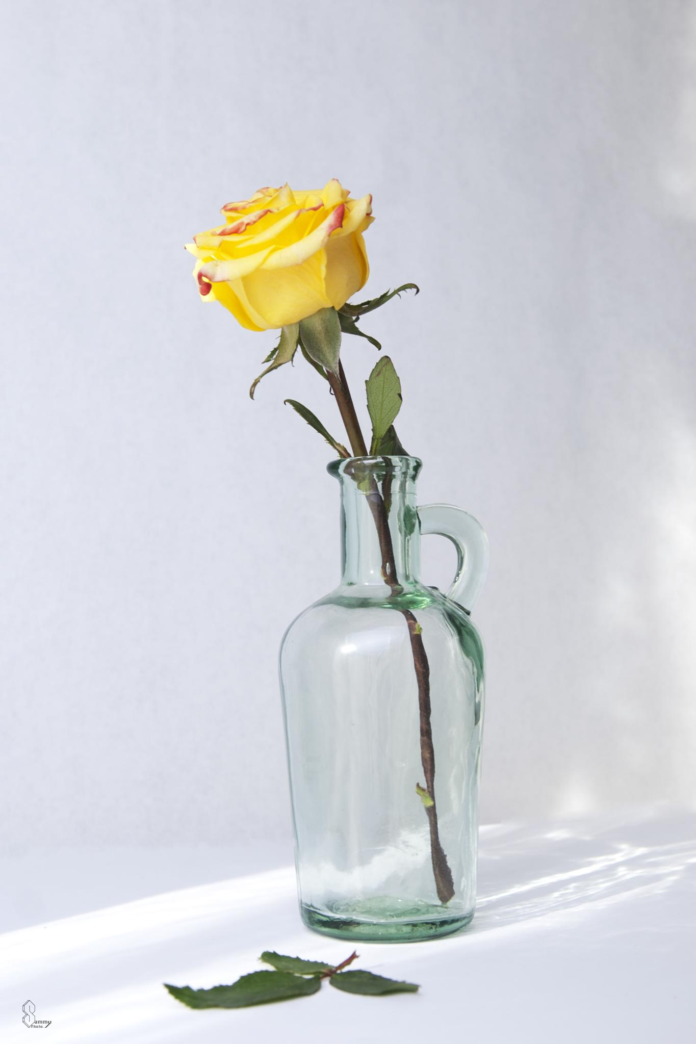 Yellow rose in an old bottle by Sammy Miller