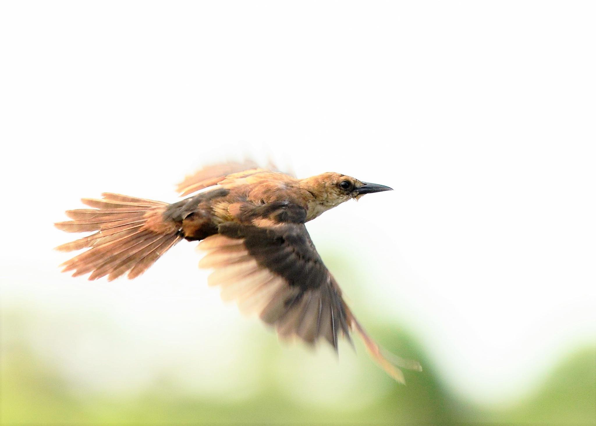 in flight by dabbleshots